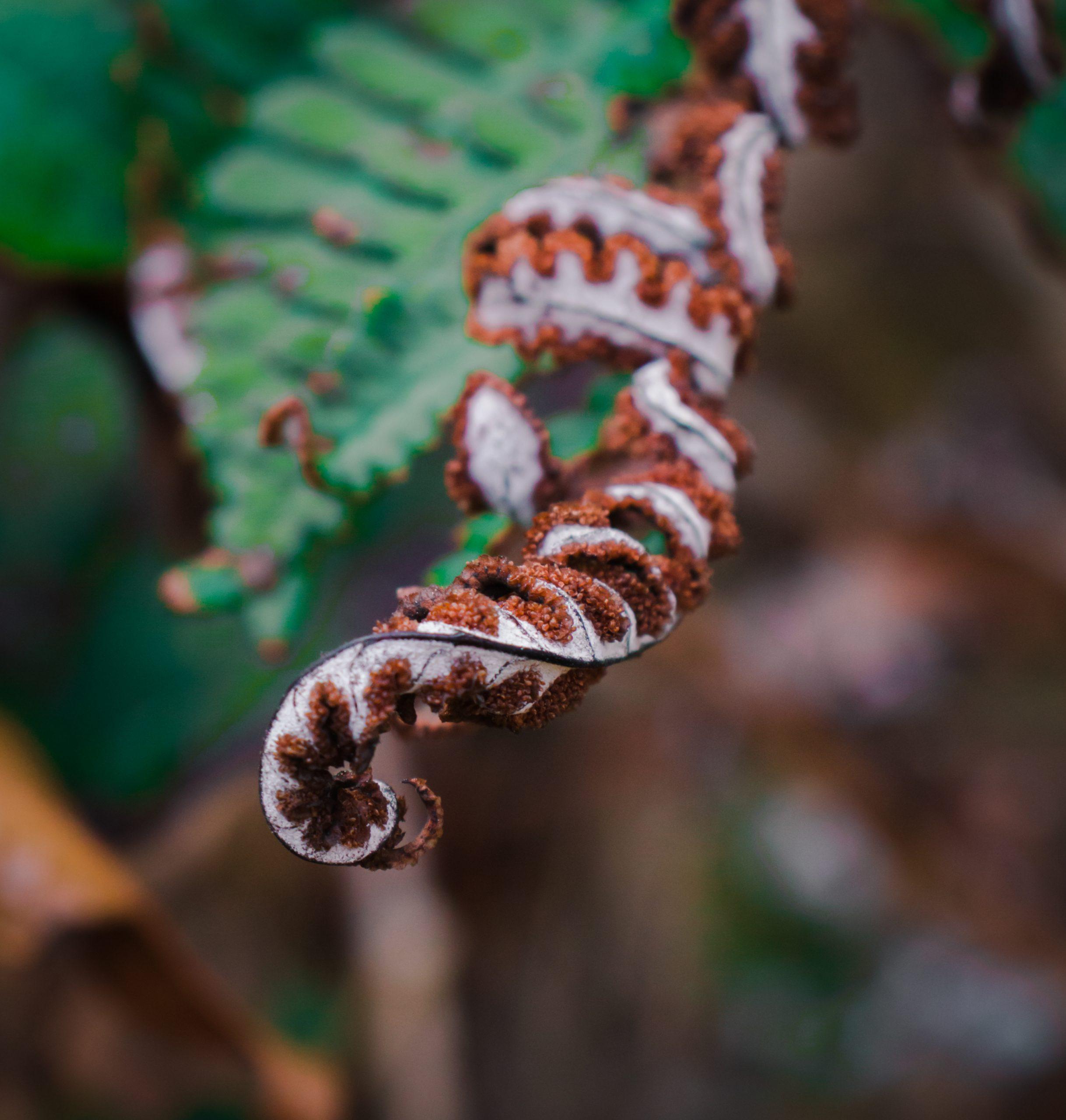 Dry leaf on plant