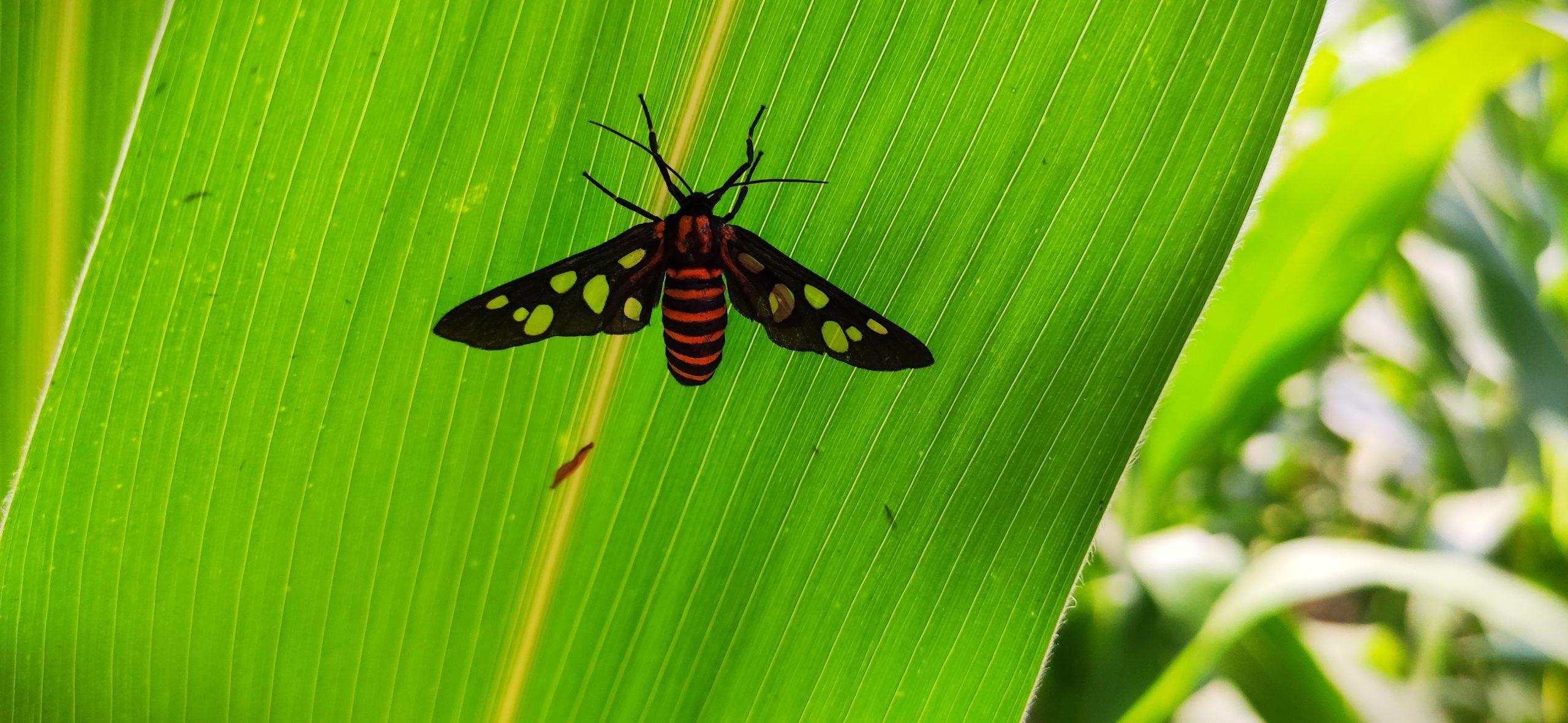 Moth on leaf