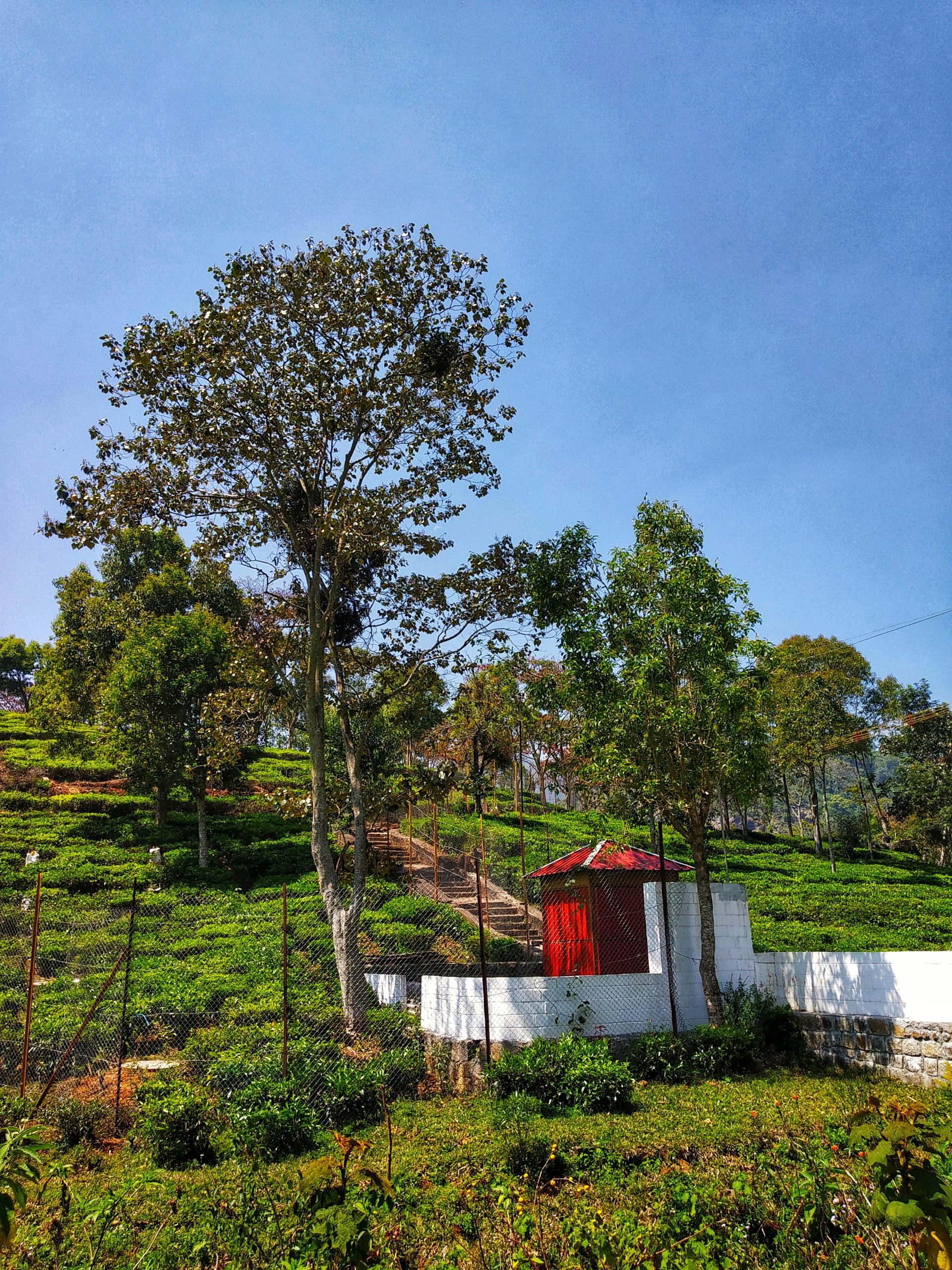 Tea farming at a hill station