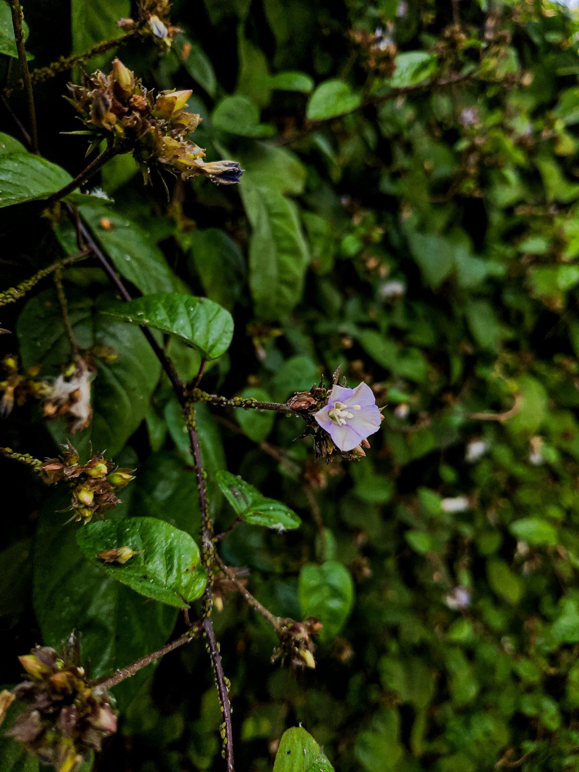 Flower on green plant