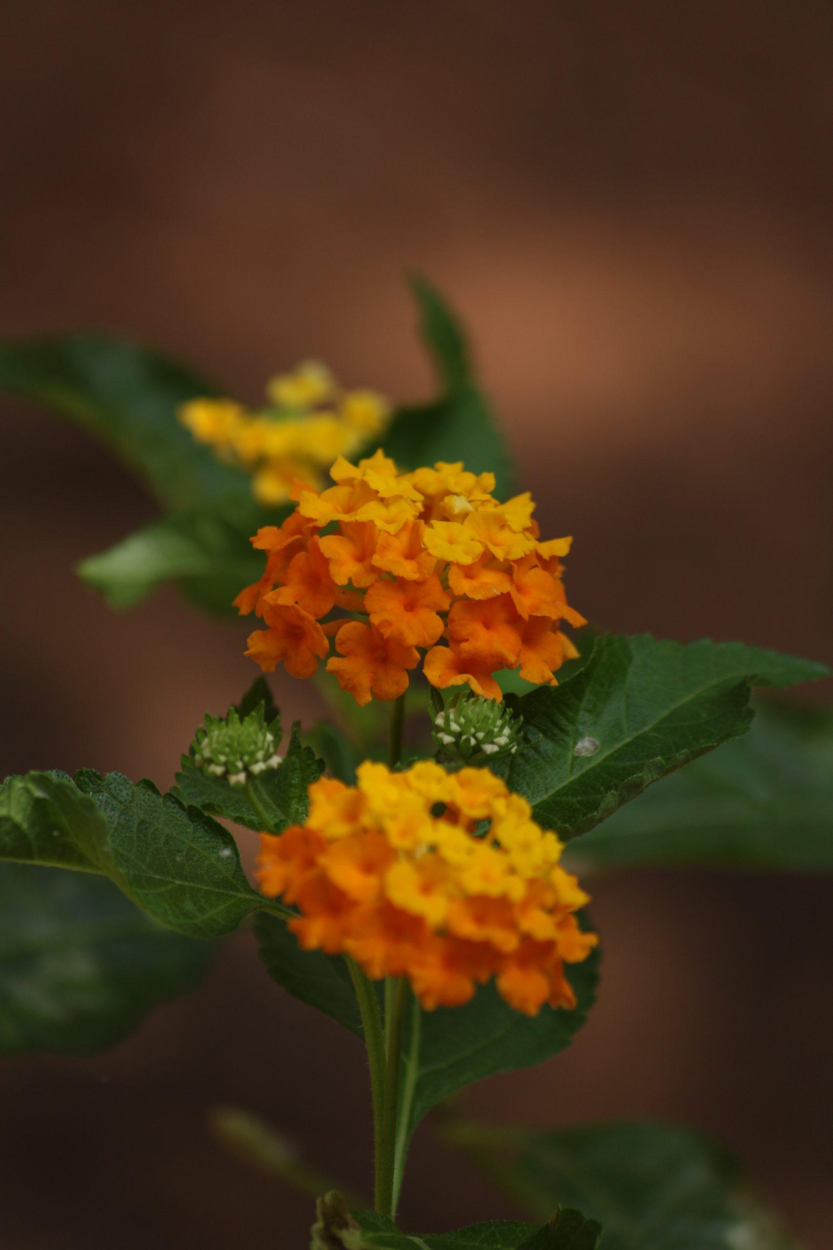 Flowers on plant