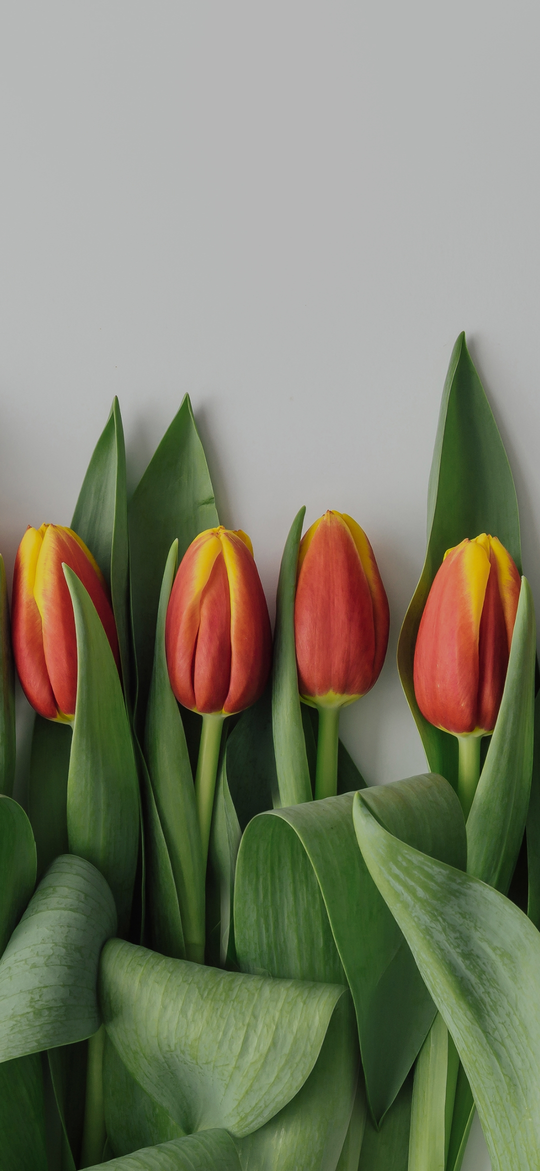 Flowers with plant leaves