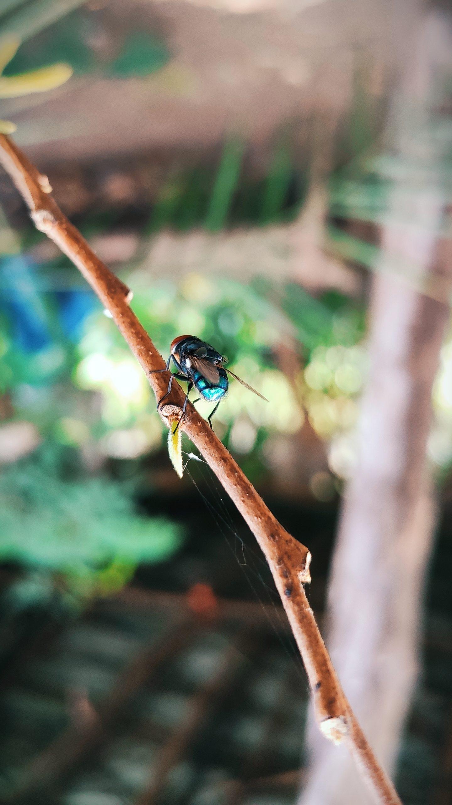 Bee on plant stem