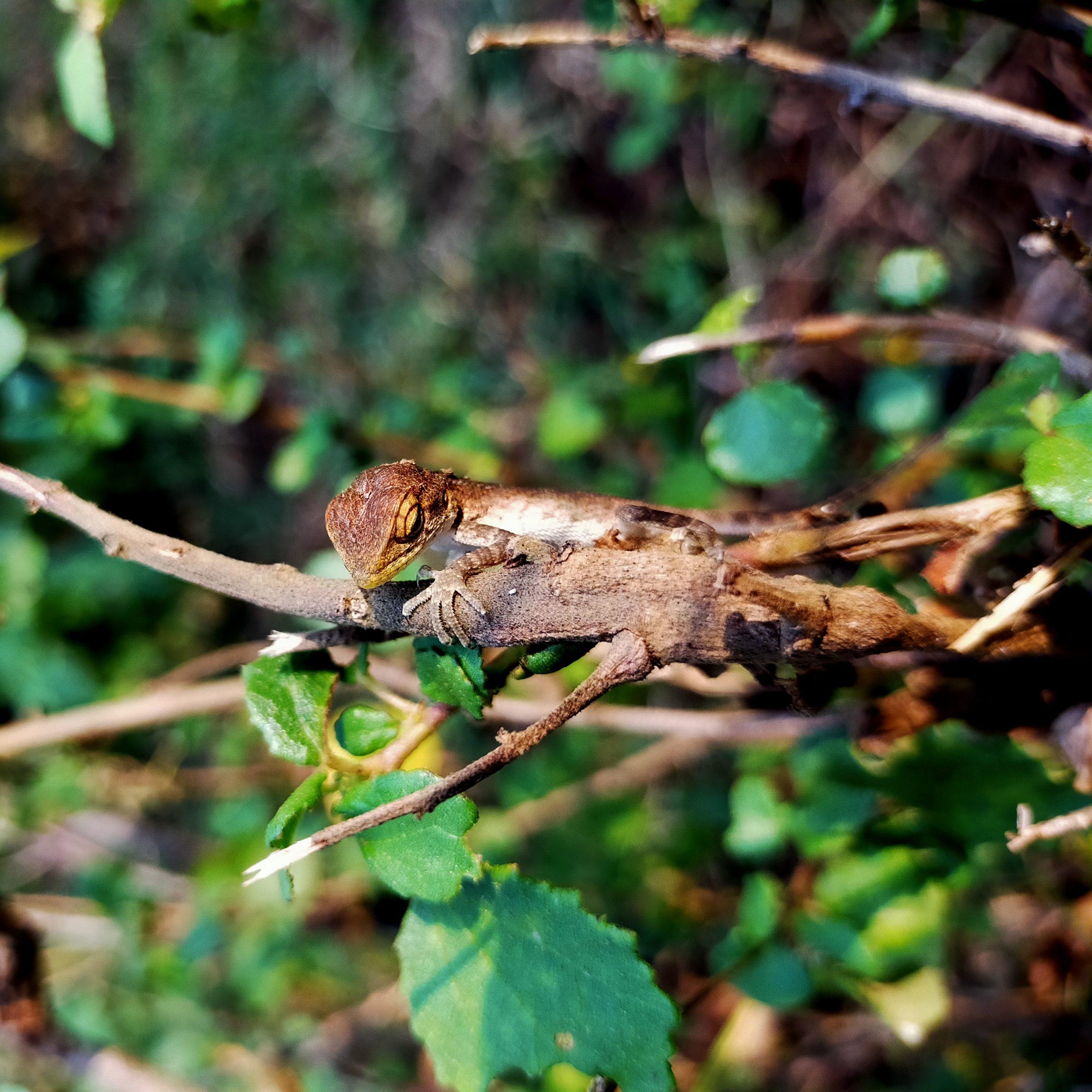 Lizard sitting on a branch