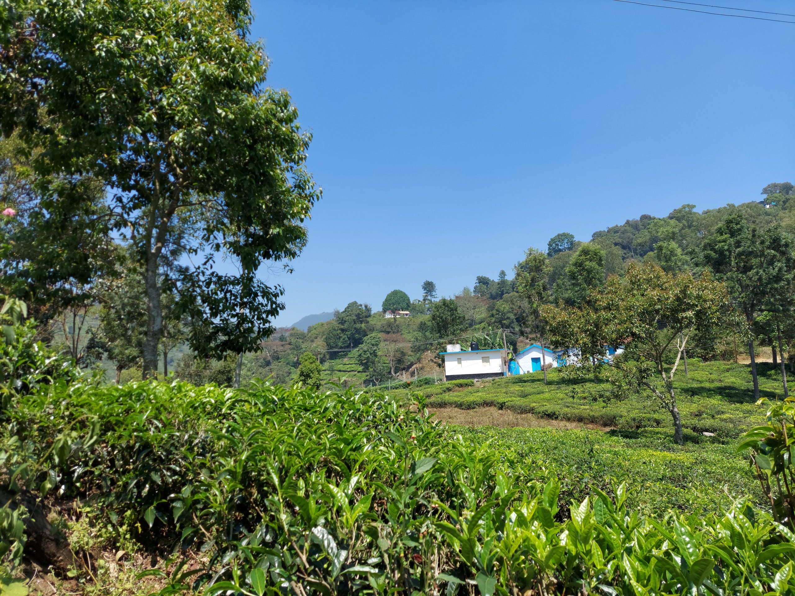 Greenery of a village