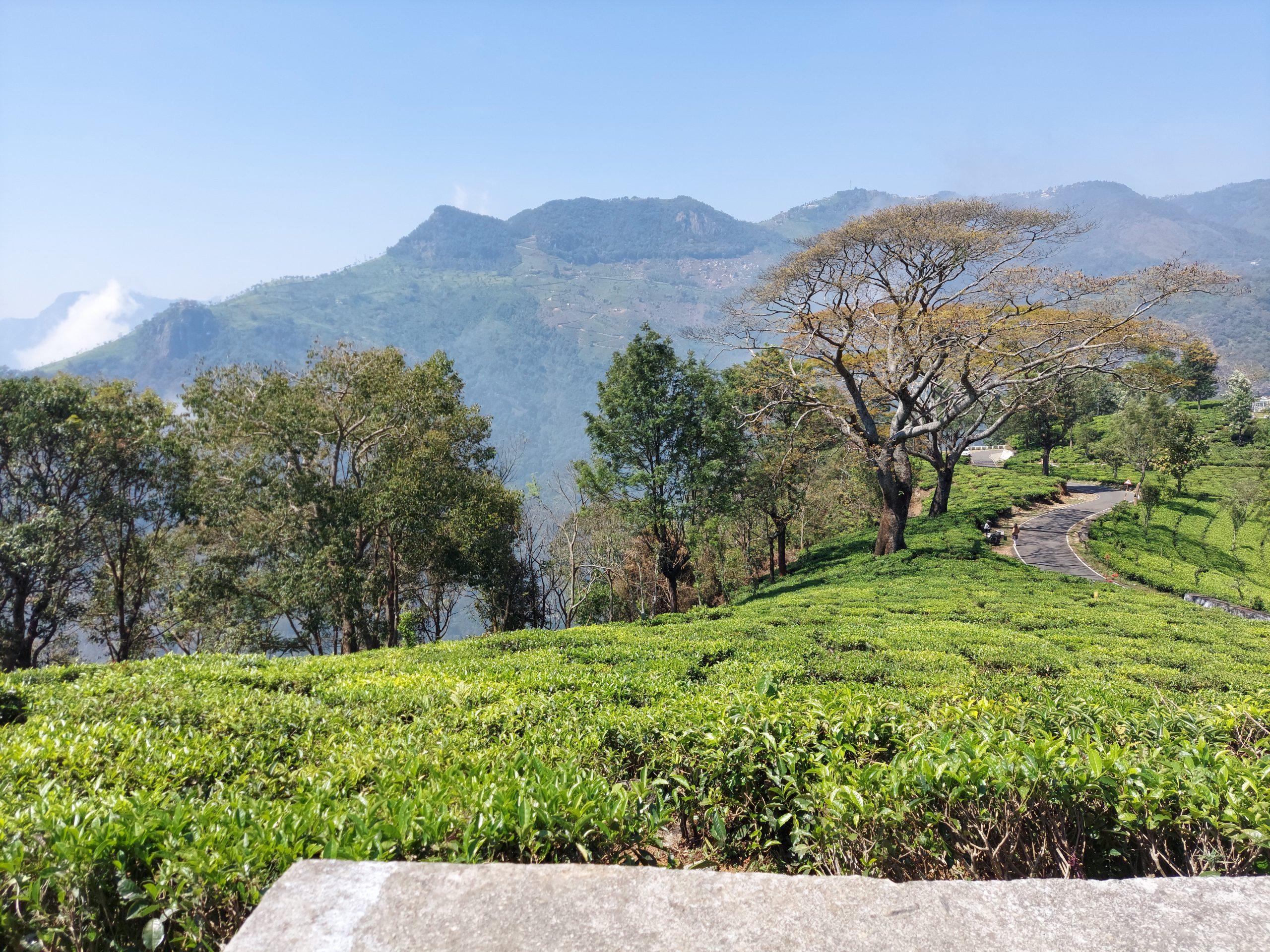 Greenery of mountains in Nilgiris