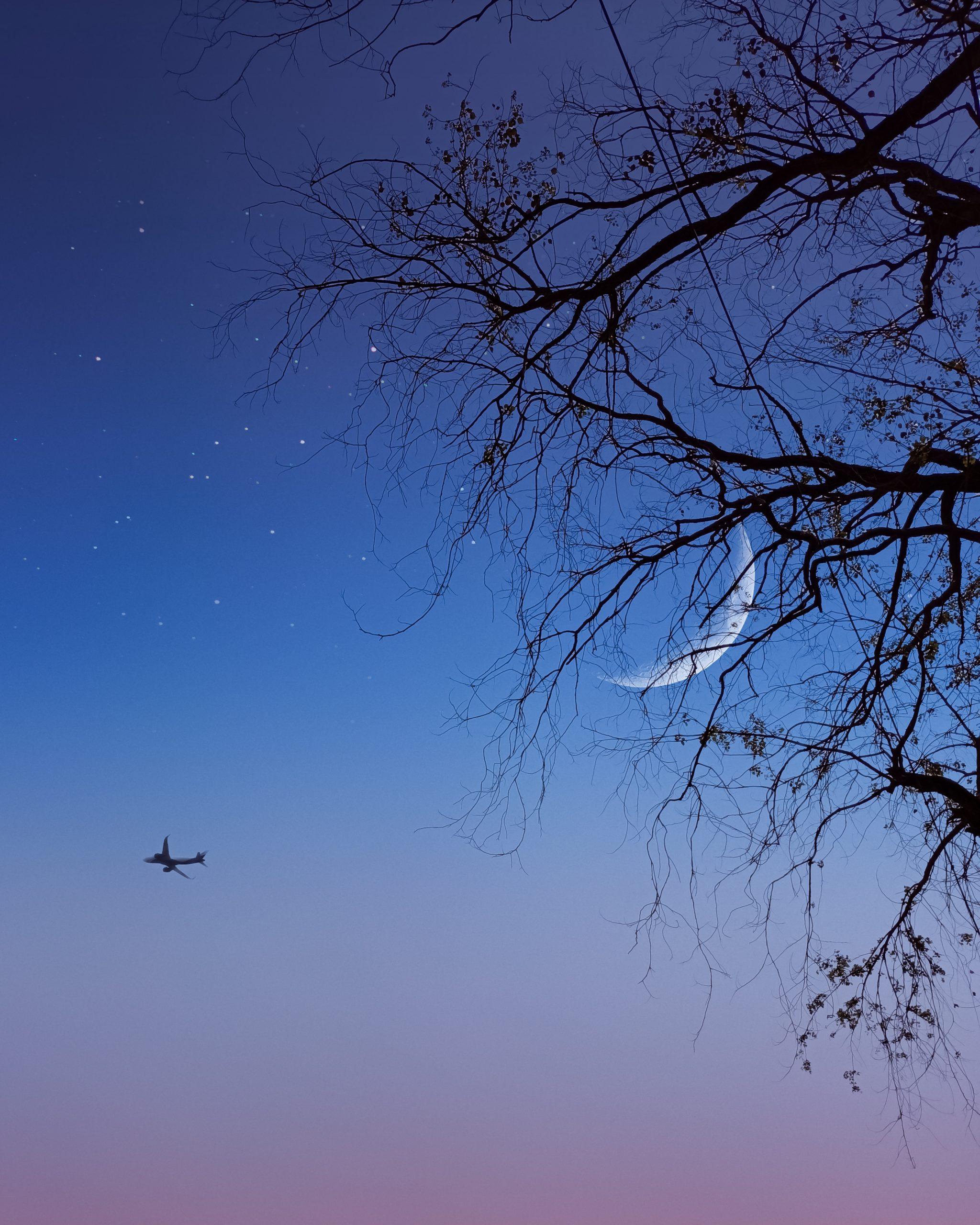Half moon through the trees