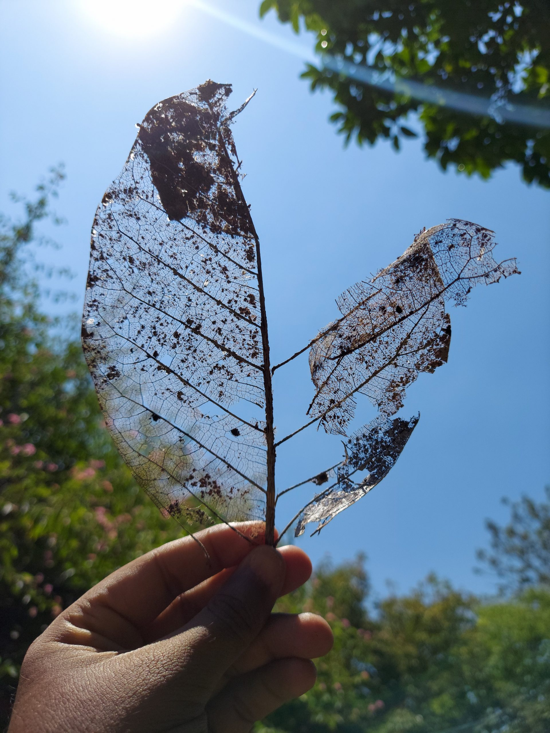 Holding an old leaf