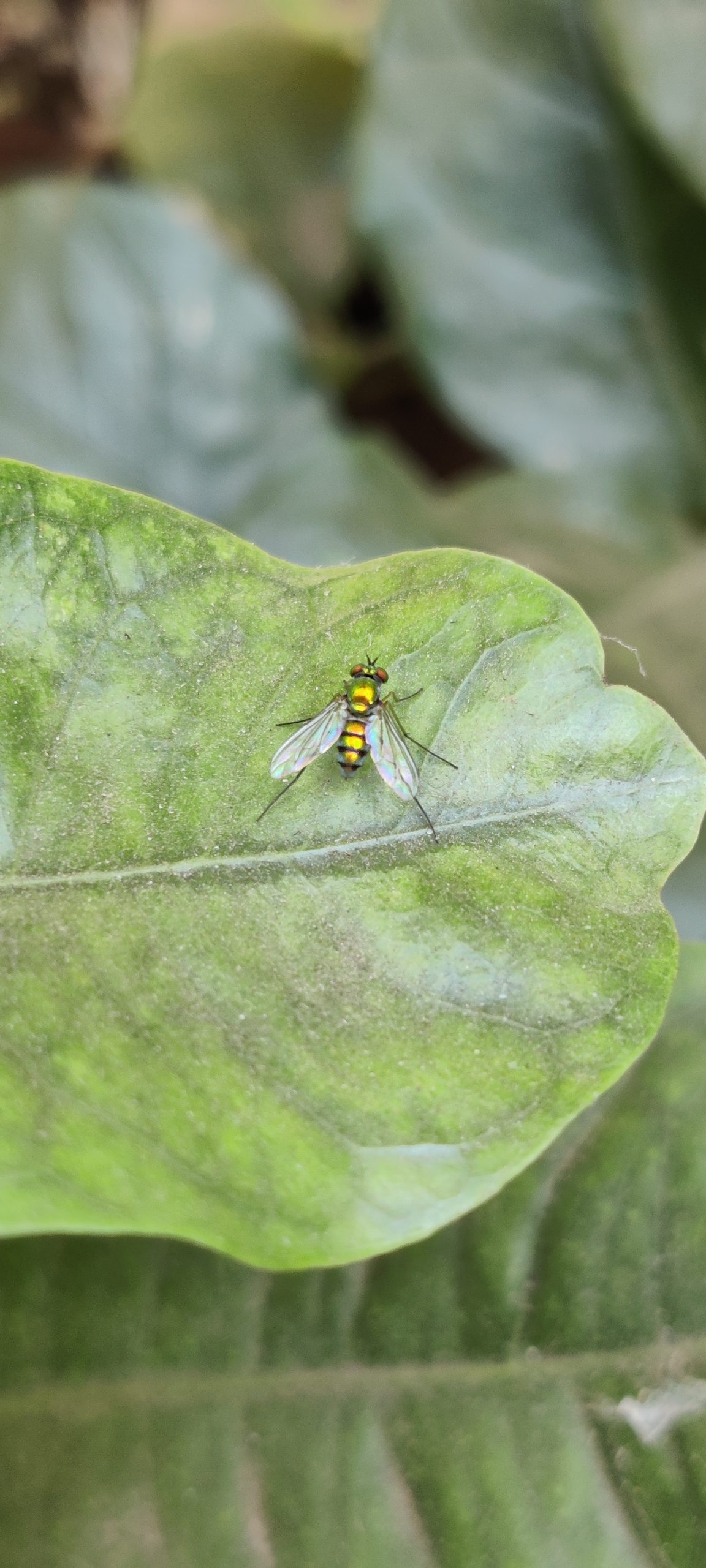 Housefly on the plant leaf