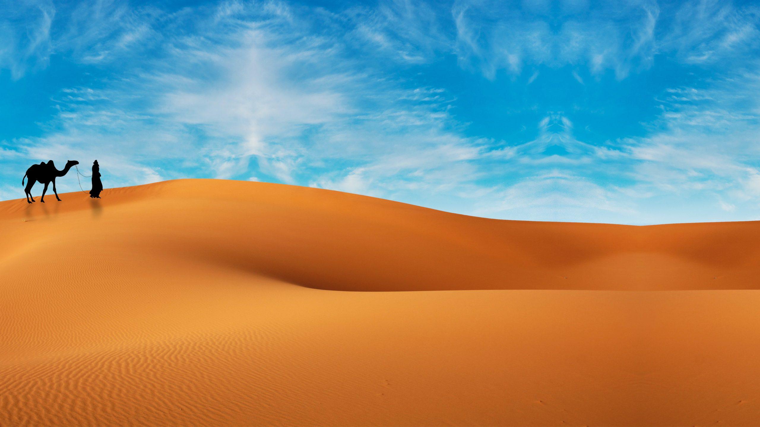 Illustration of desert wallpaper