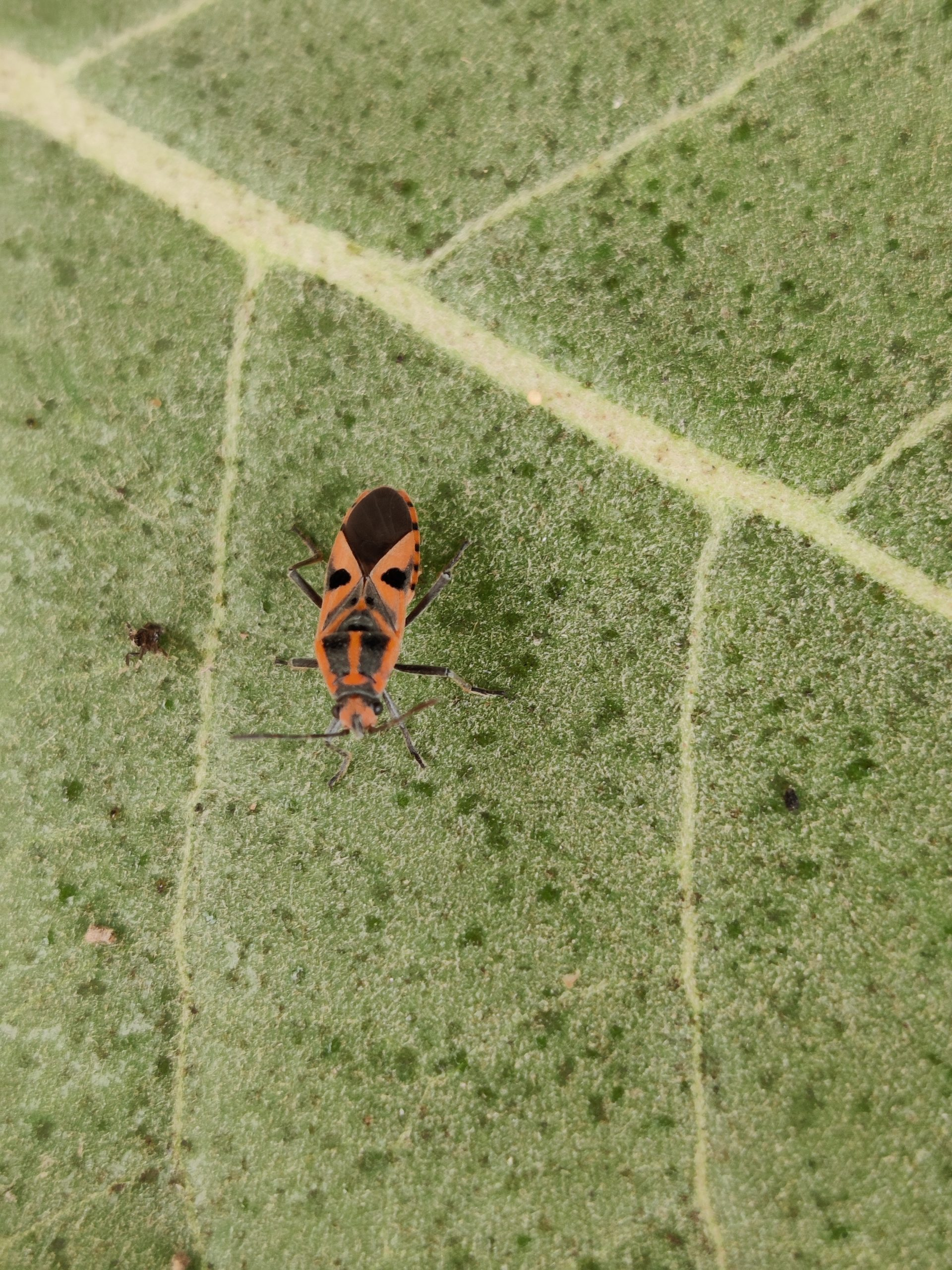 Insect on plant leaf