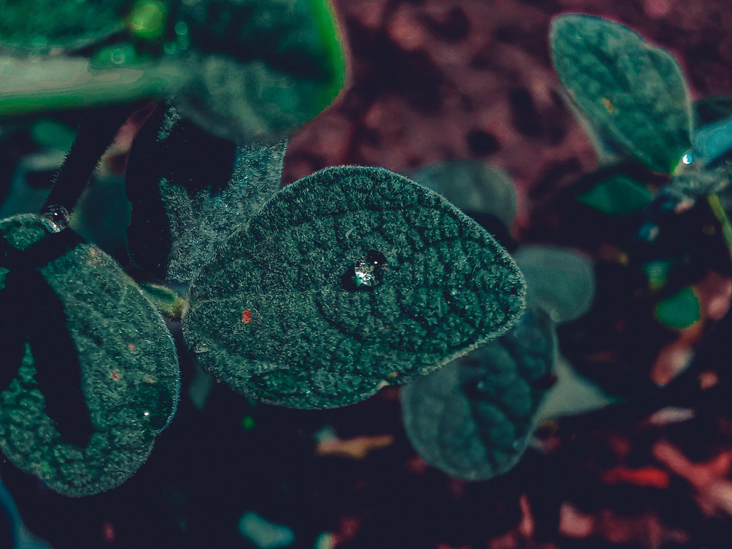 Water drops on a plant leaves