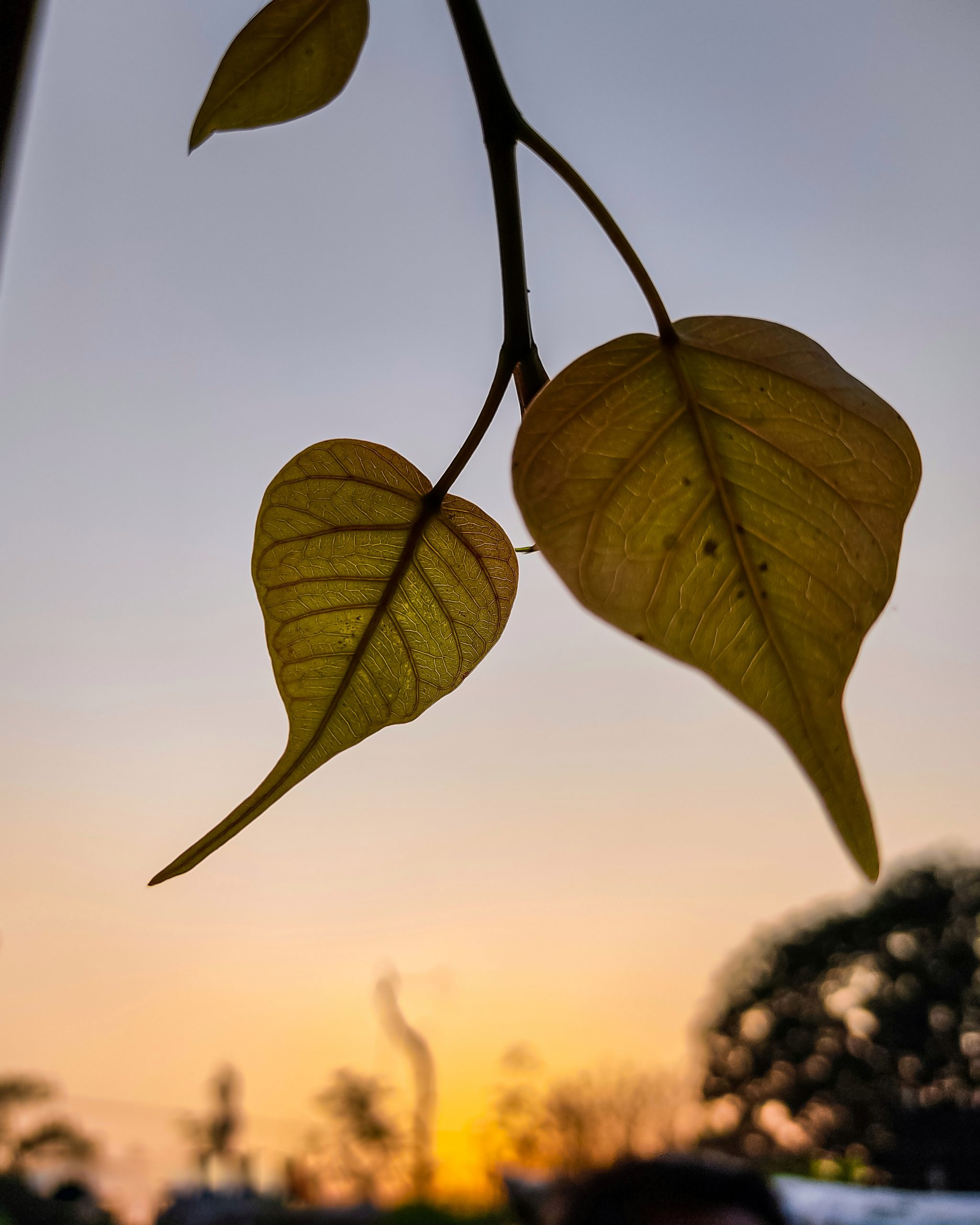 Beautiful view of leaves with sunset behind