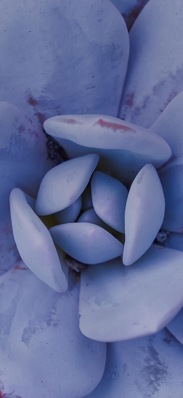 Macro view of flower petals