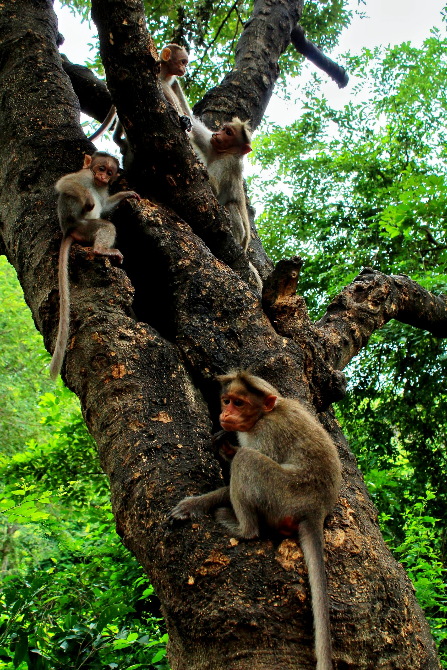 Monkeys on the tree in forest
