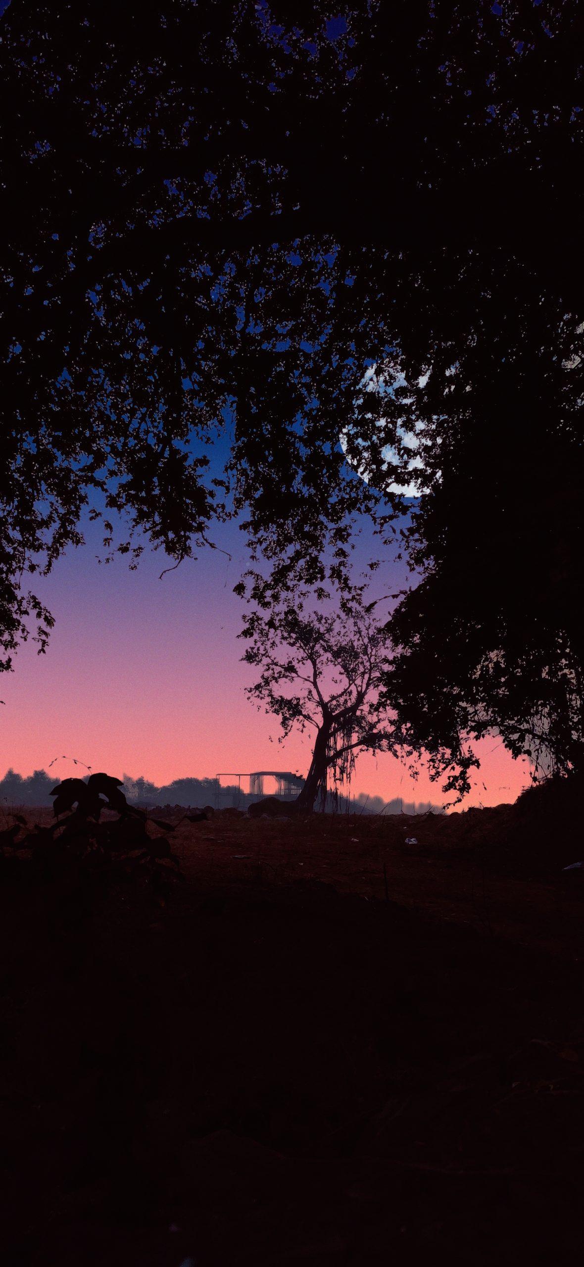 Moon behind the tree