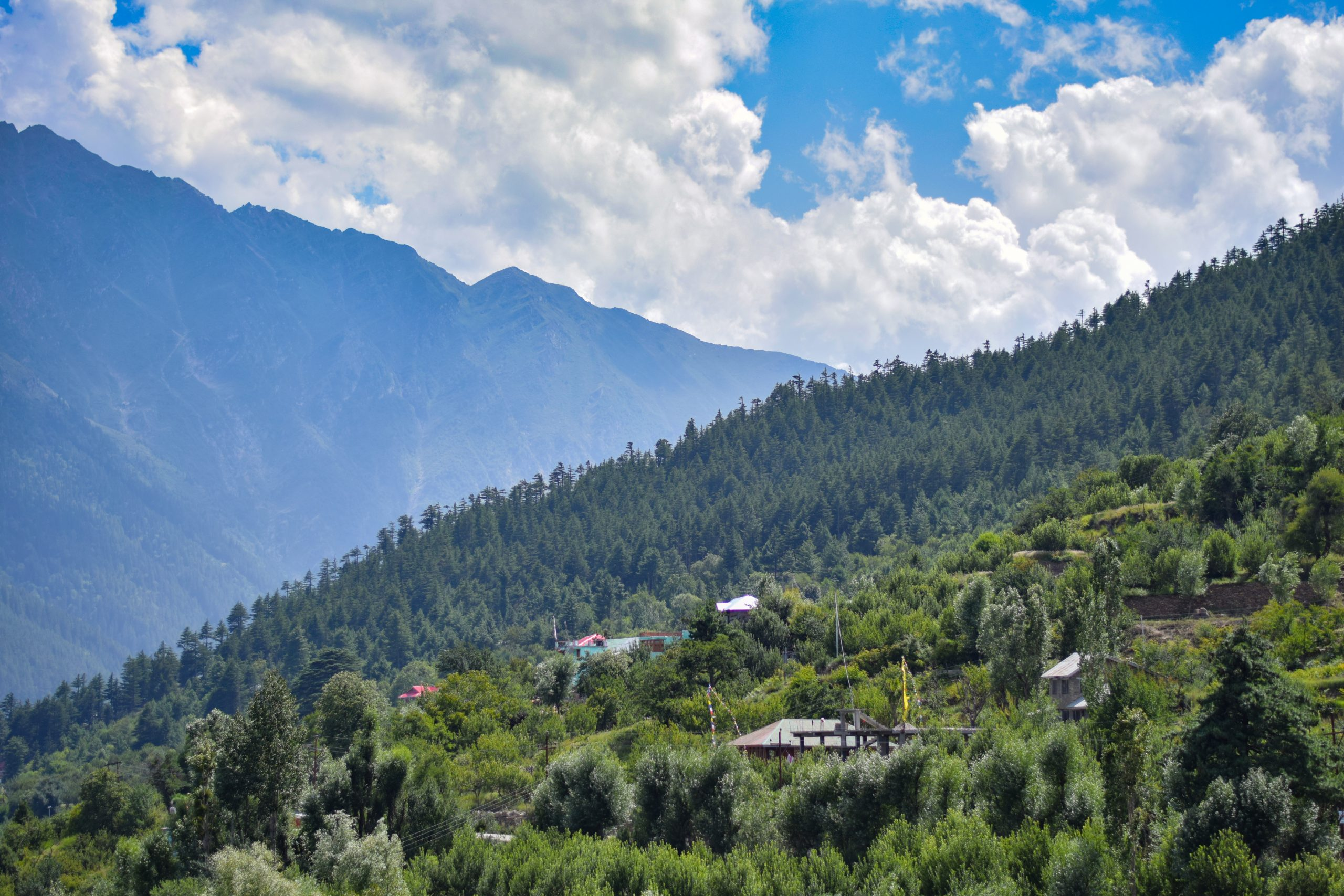 Trees and greenery of mountain slope