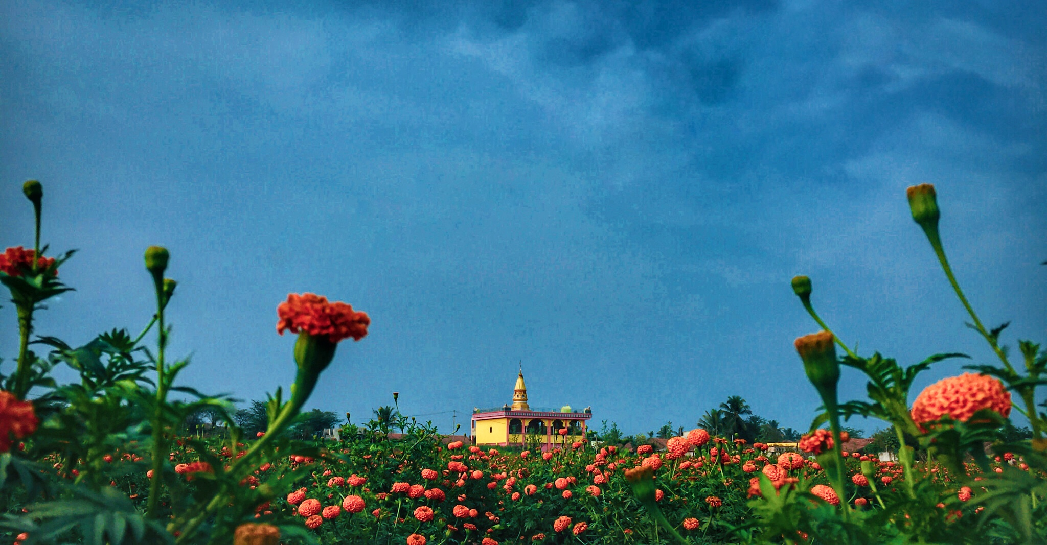 Temple and buds of flowers