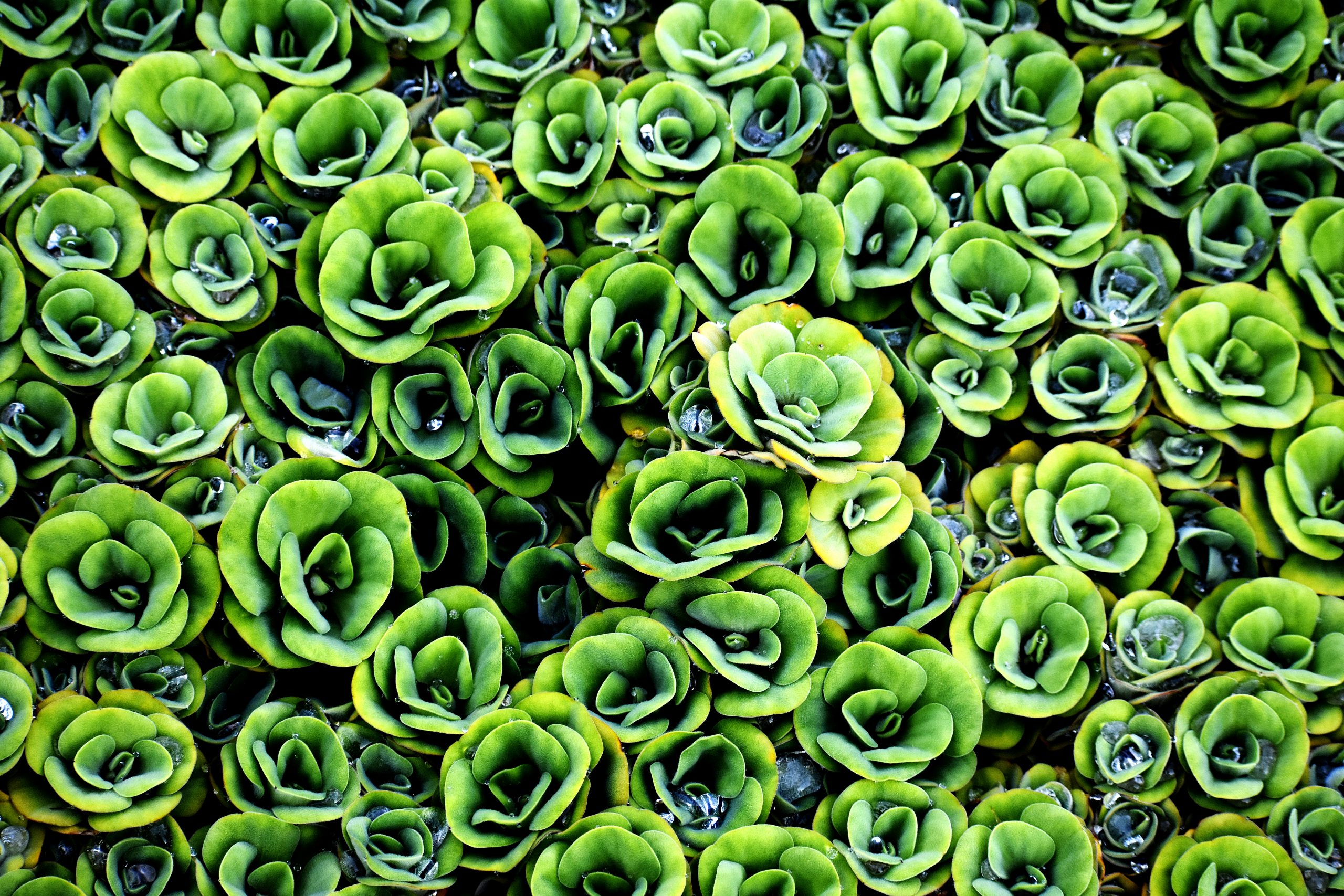Patterned Decorative Water Plants