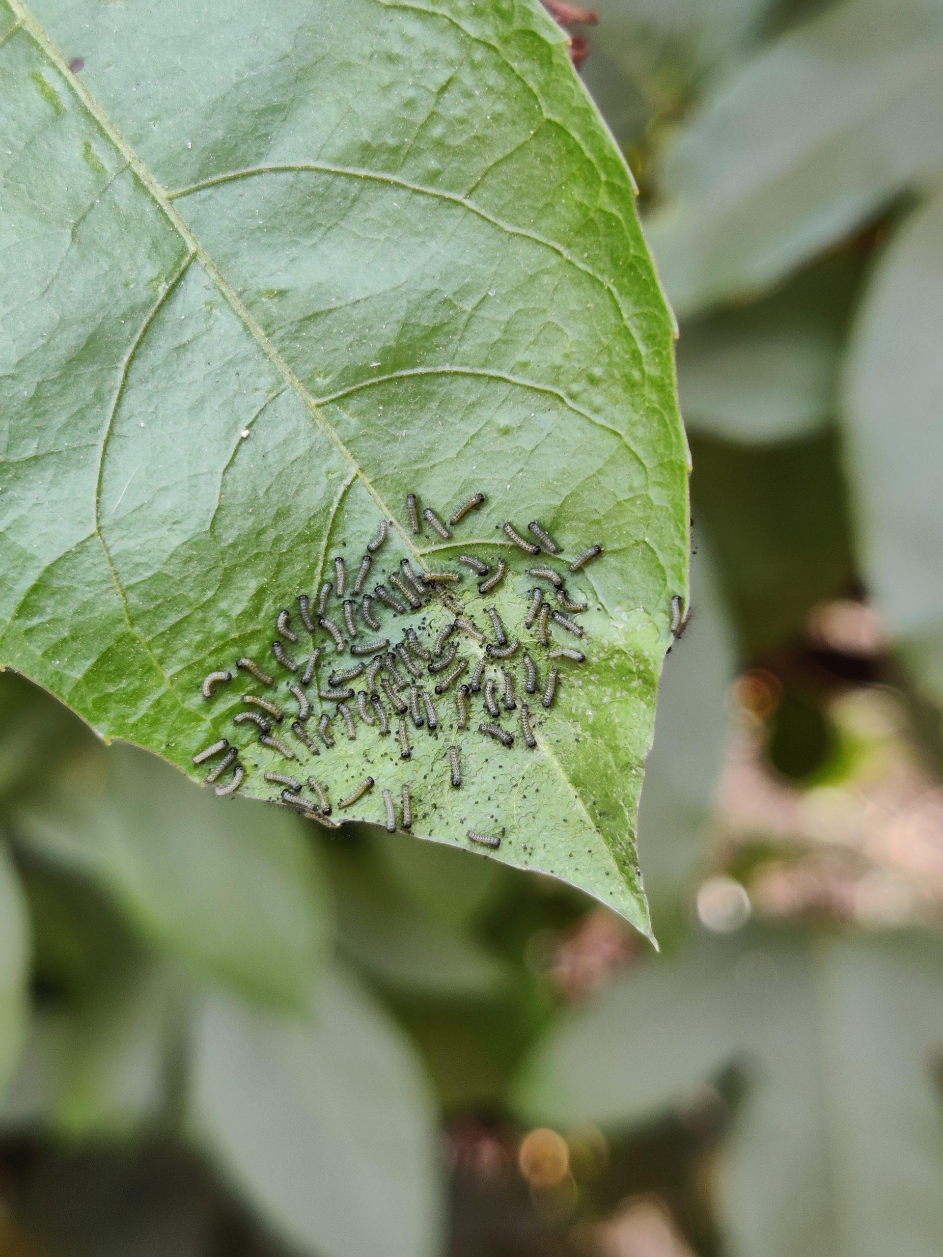 Pests on plant leaf