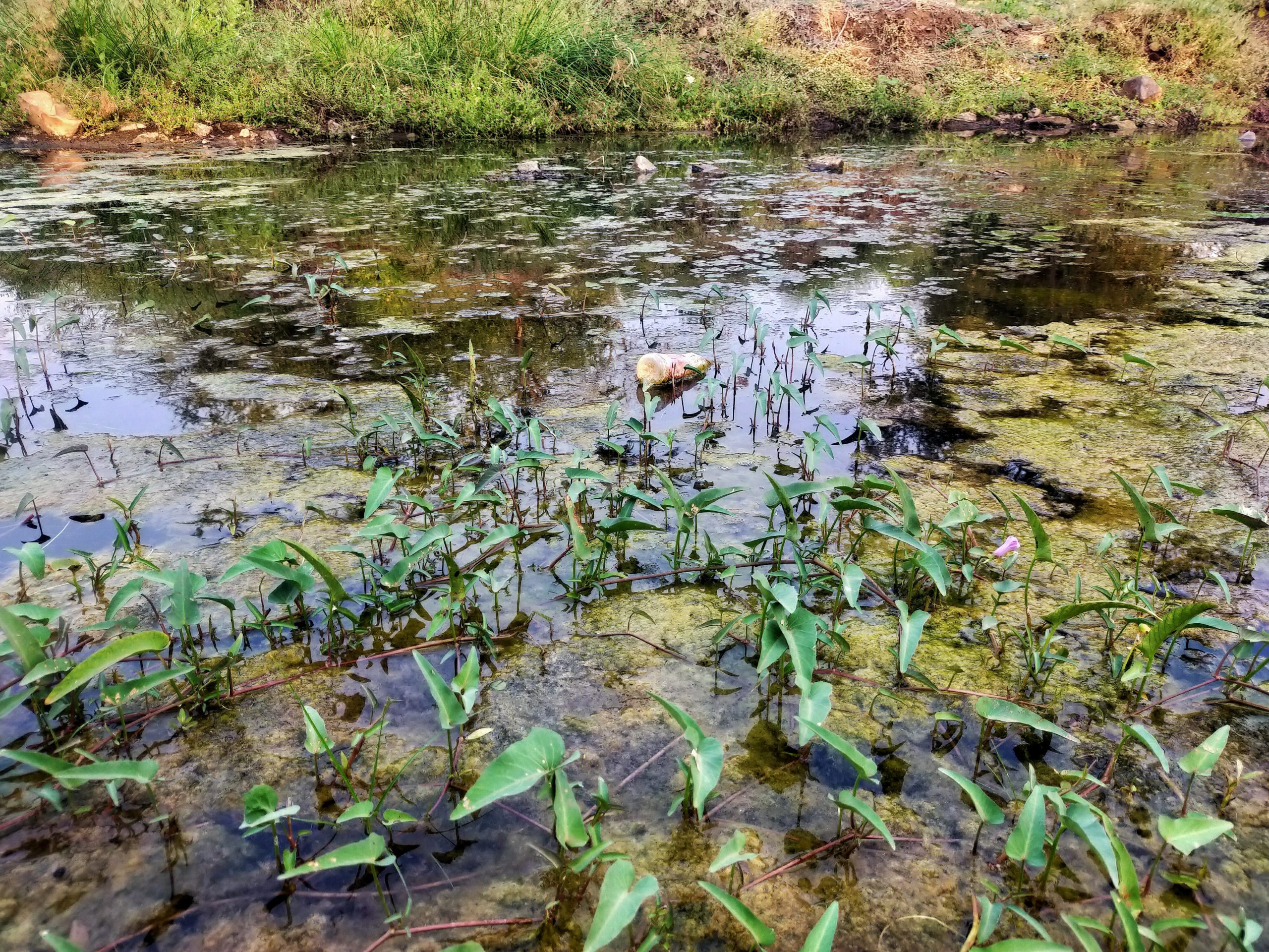 Plastic bottle and water plants in the river