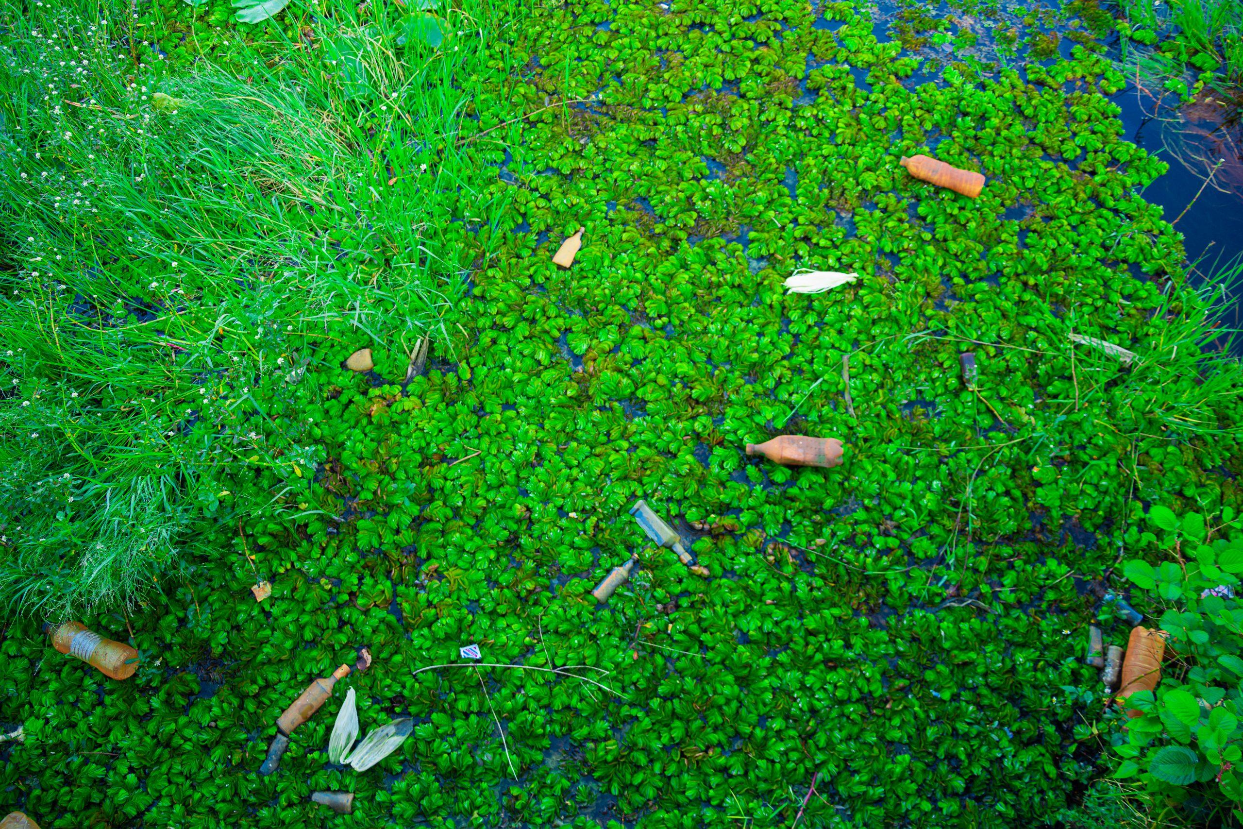 Plastic bottles floating in a lake