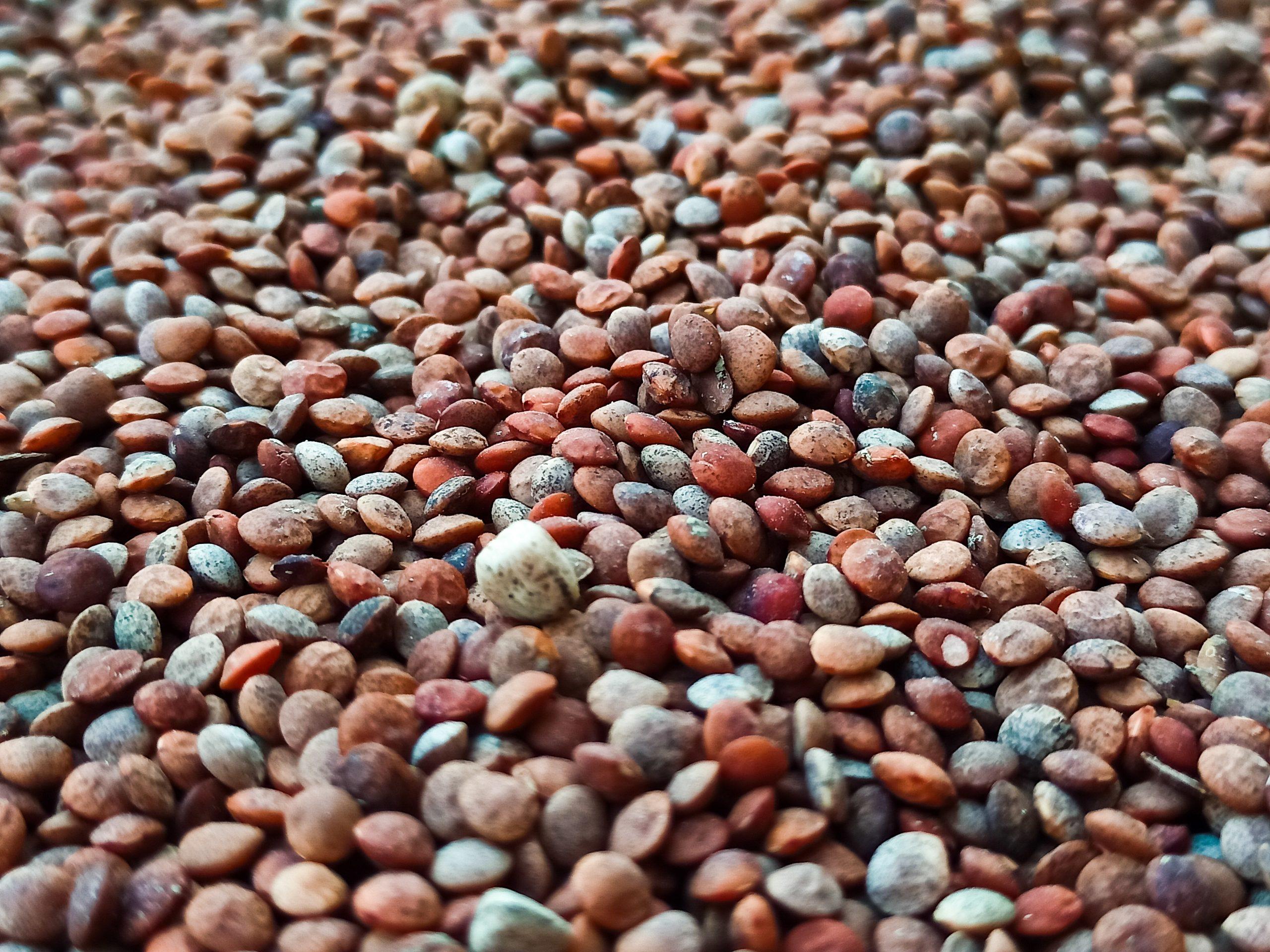 Pulse grains