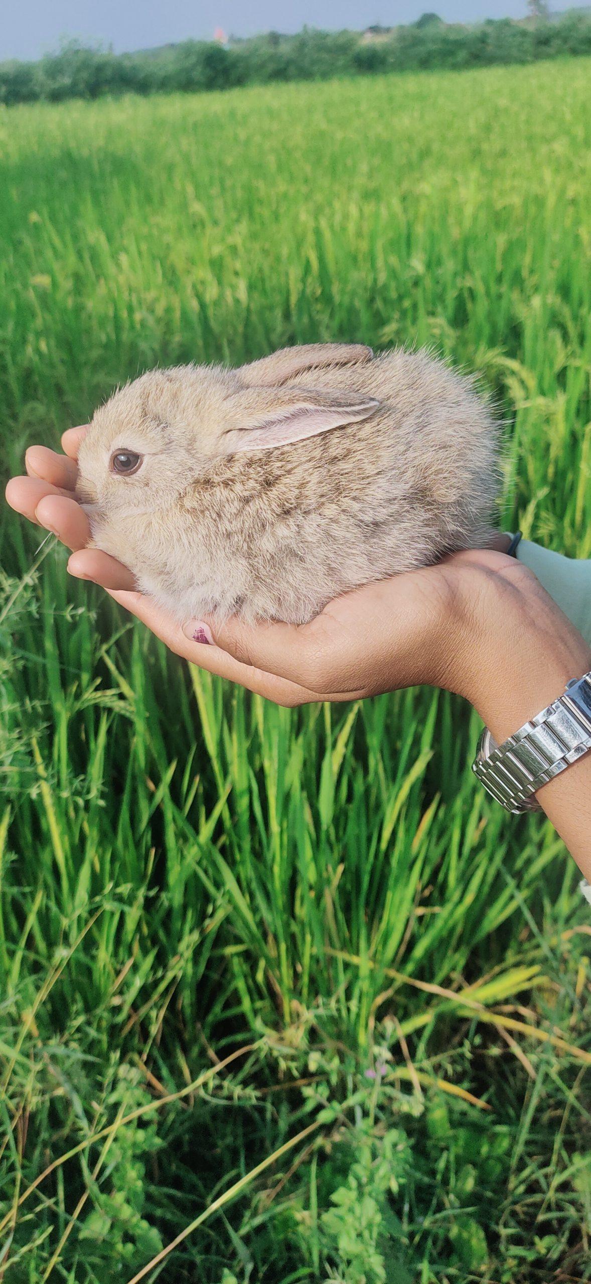 Rabbit in hand