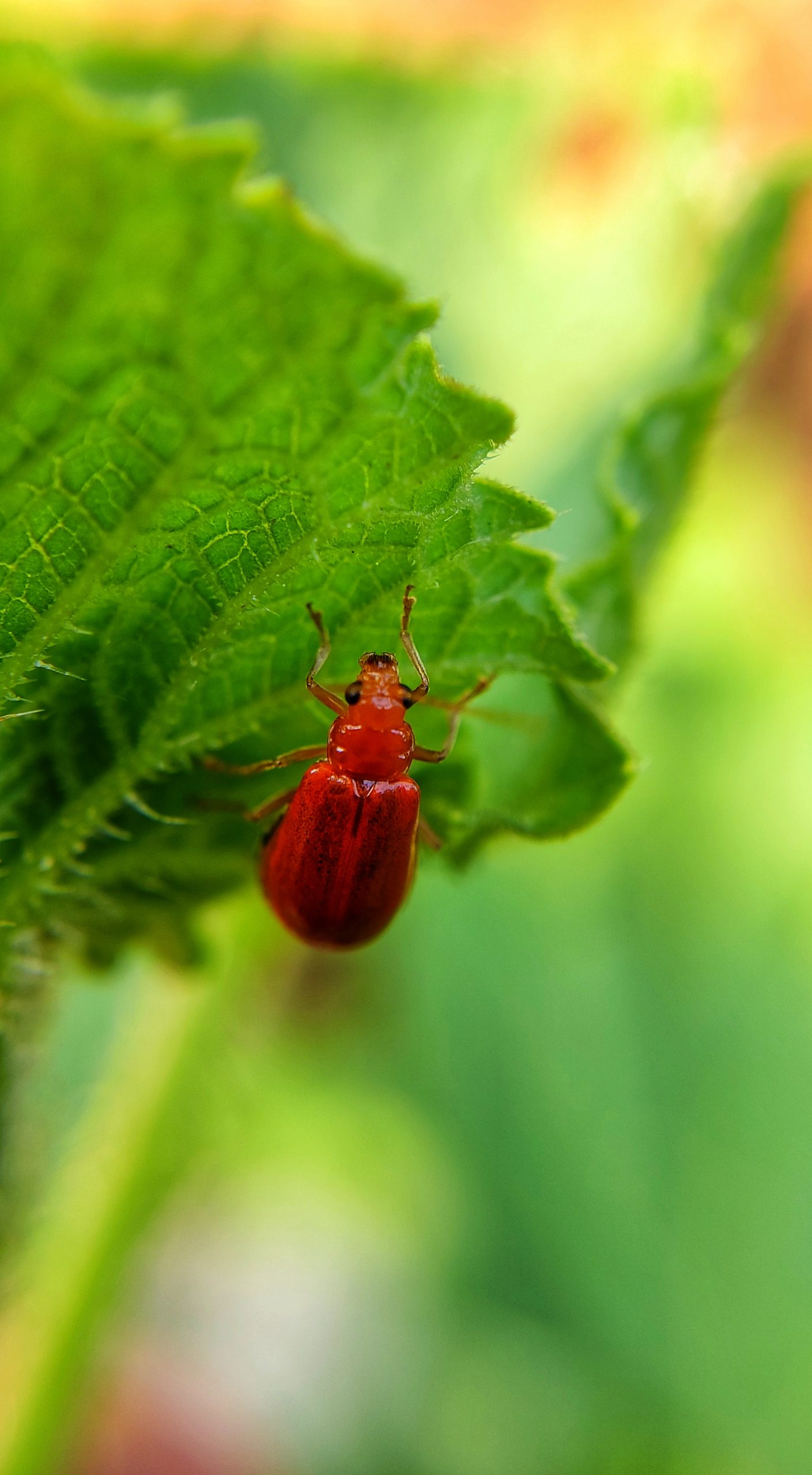 Red Bug on the plant leaf