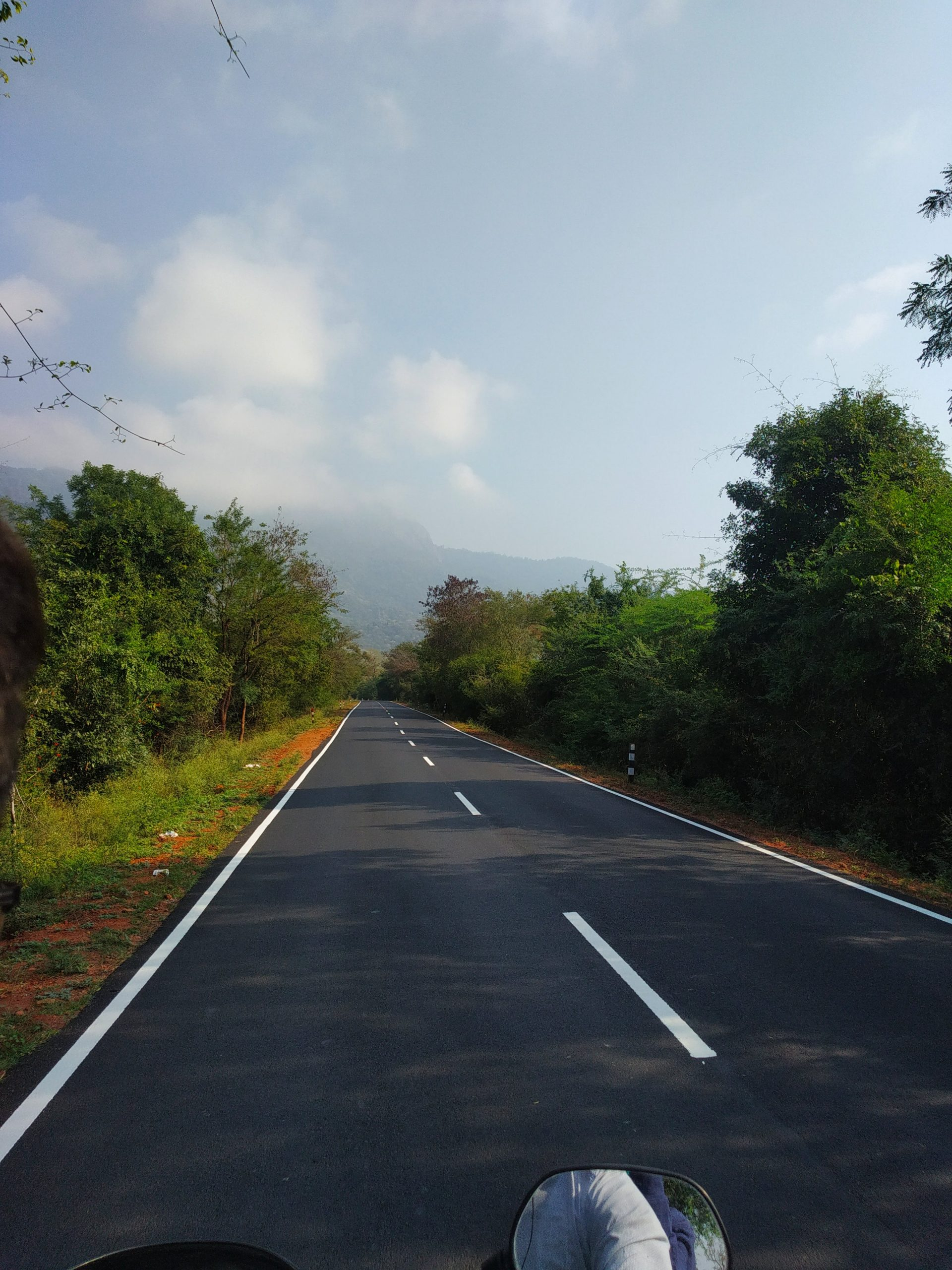 Highway in the midst of forest