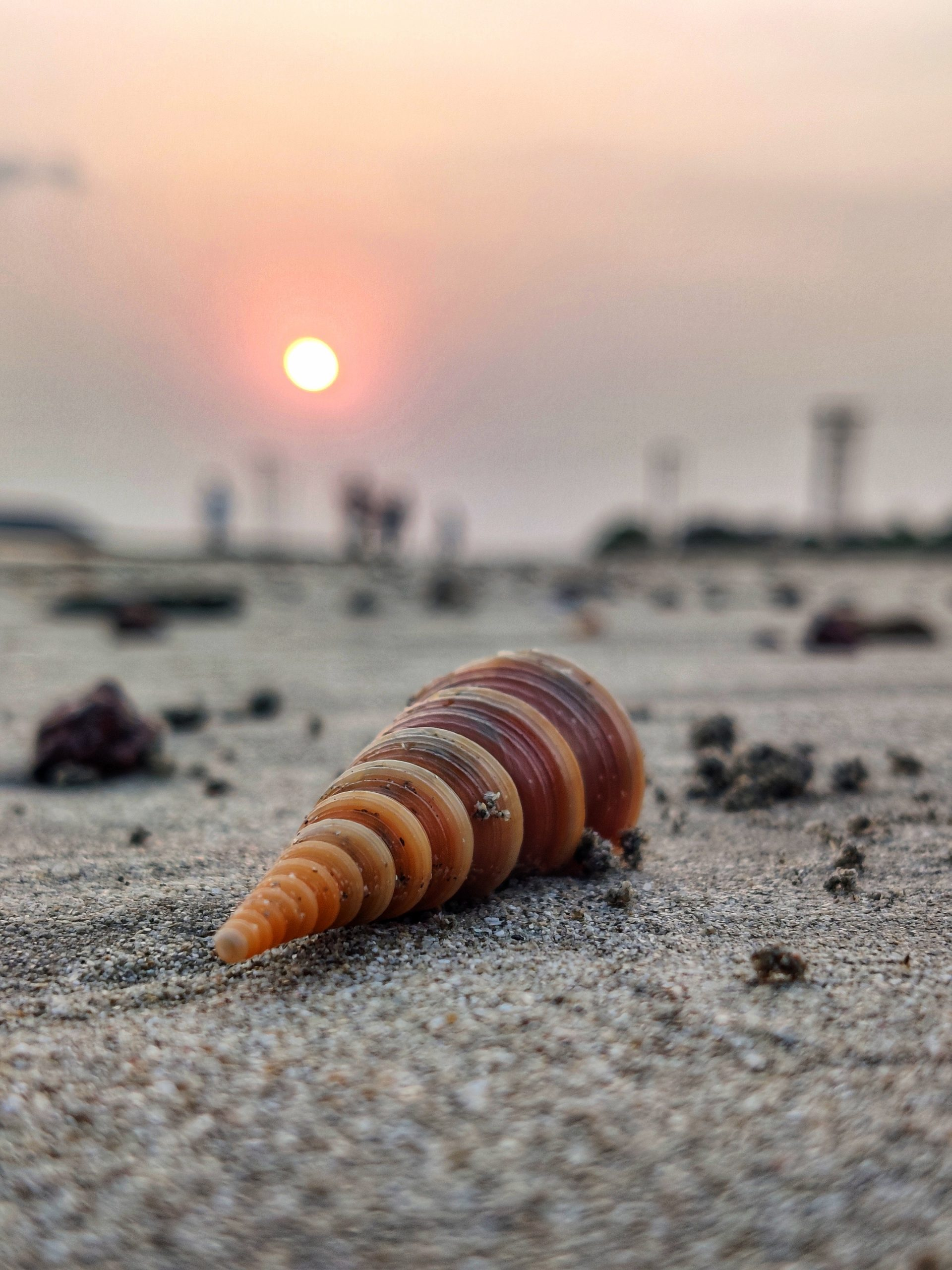 Sea shell in sunlight