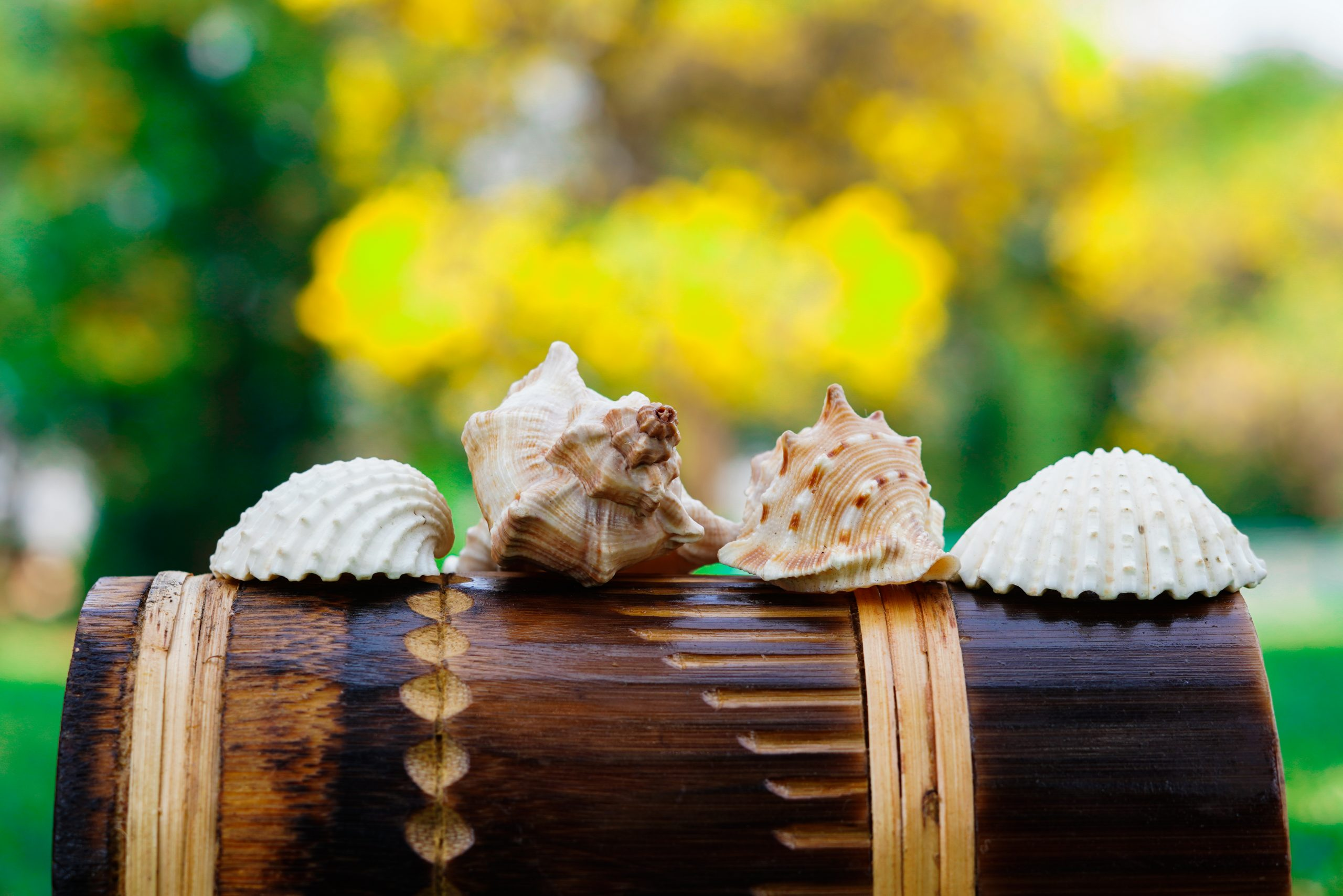 Sea shells on a wooden roll