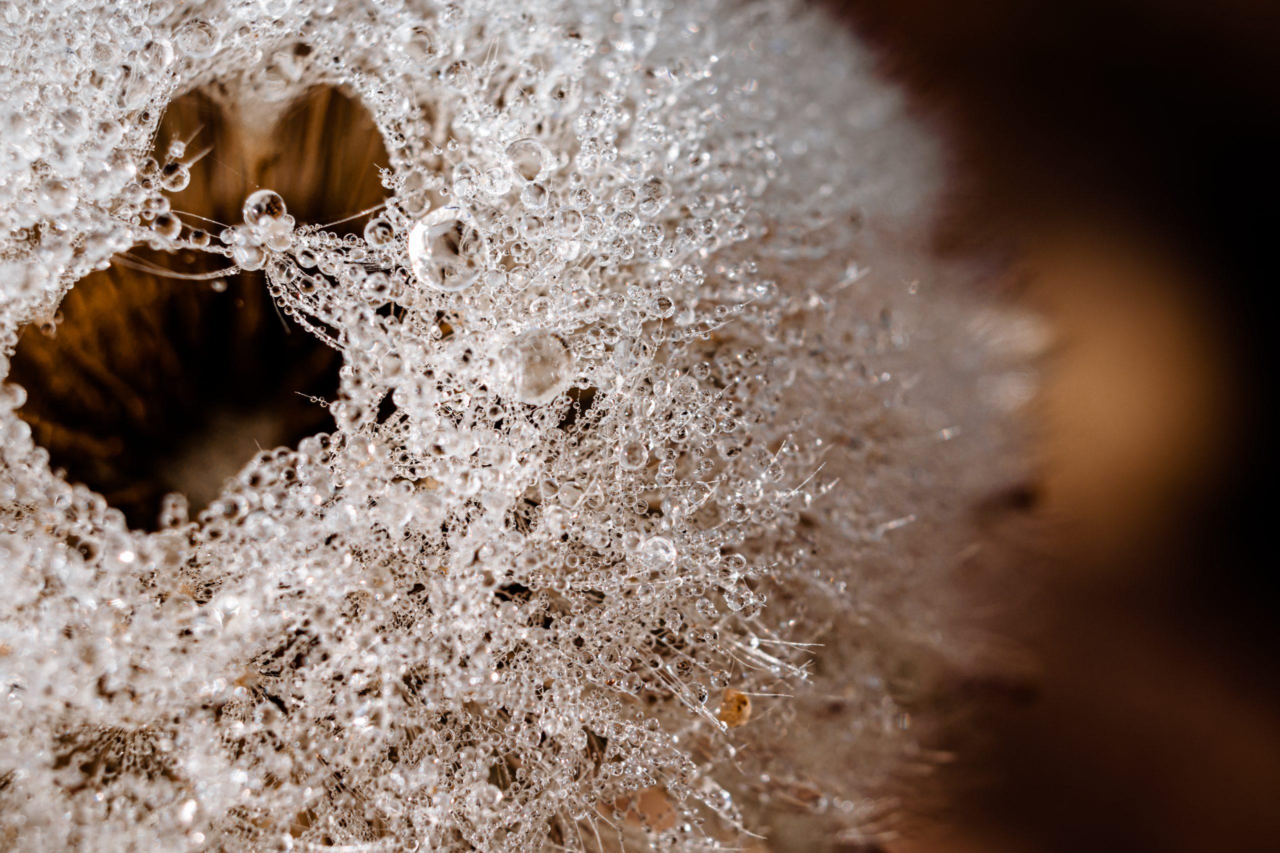 Sparkle dew drops