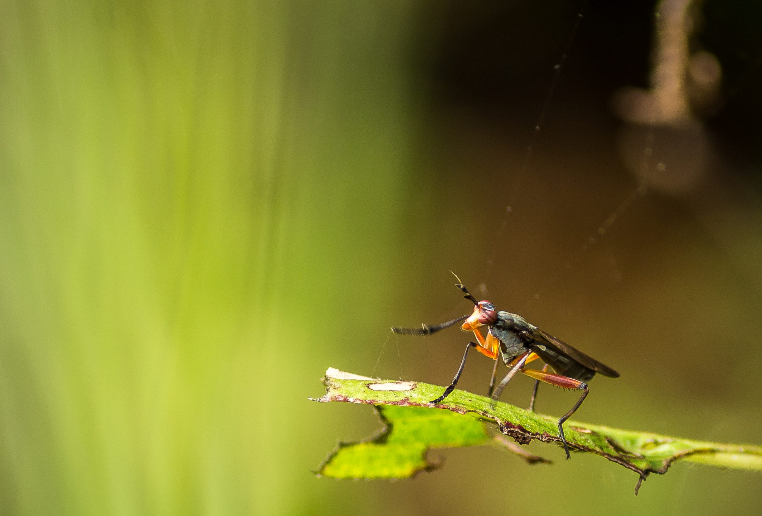 Bug on the plant leaf
