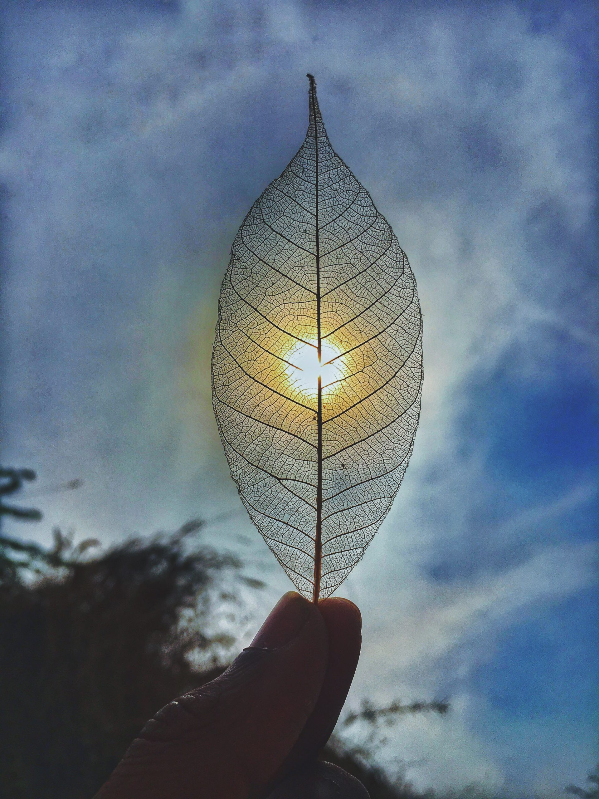 Sunshine through a dry leaf