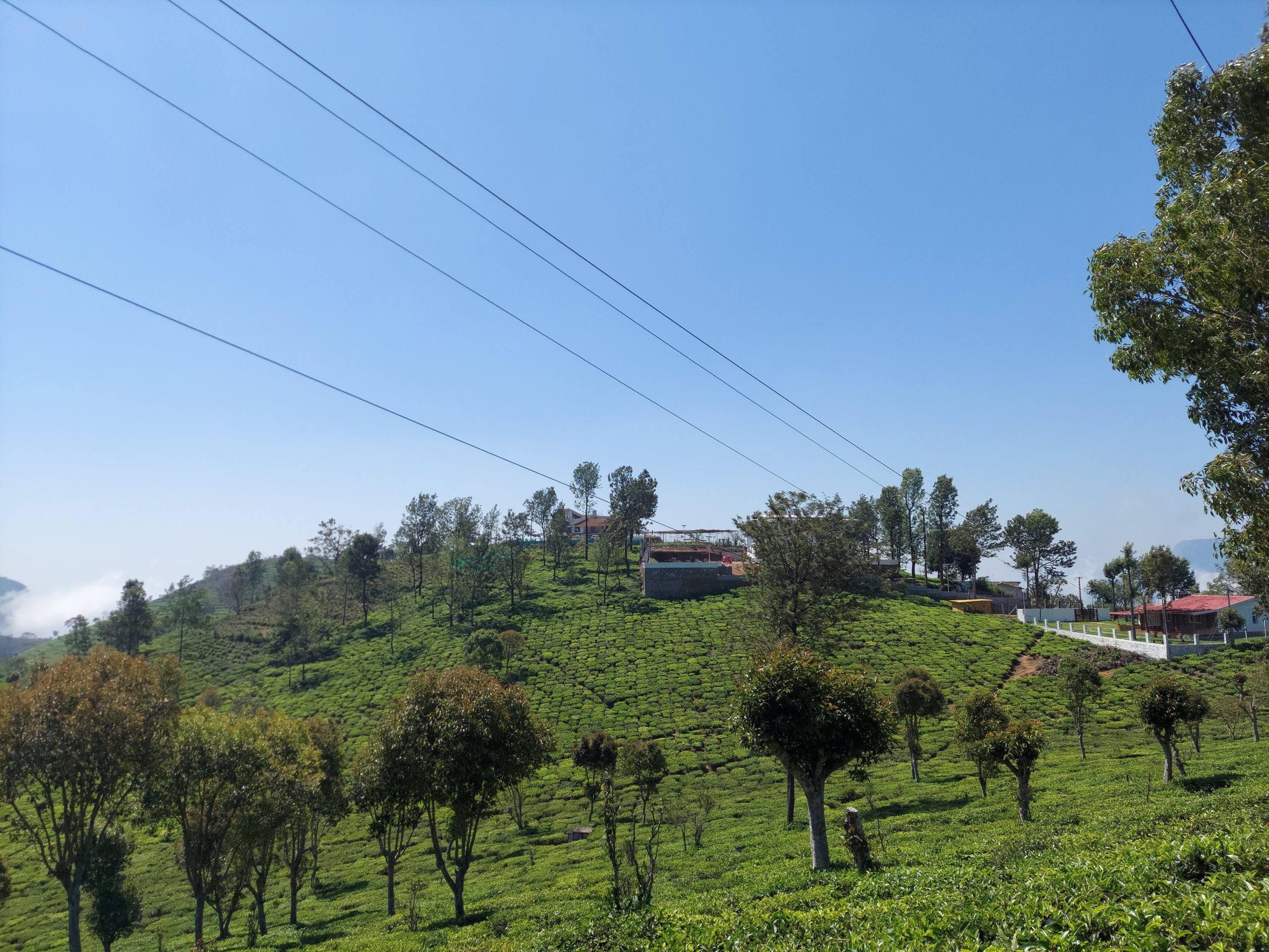 Tea estate hill view