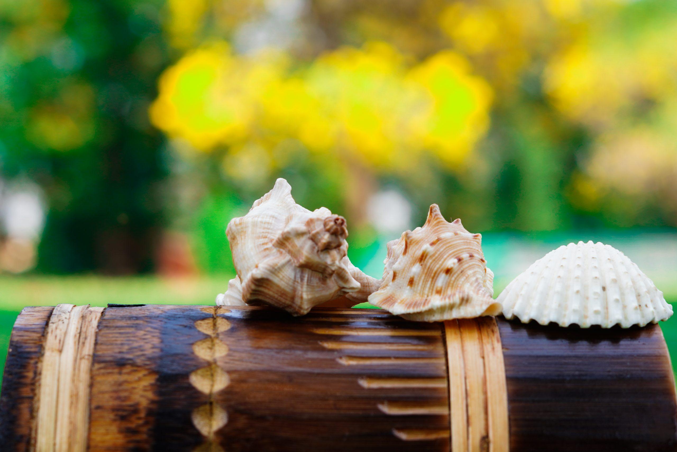 Three Sea Shells on wooden mug
