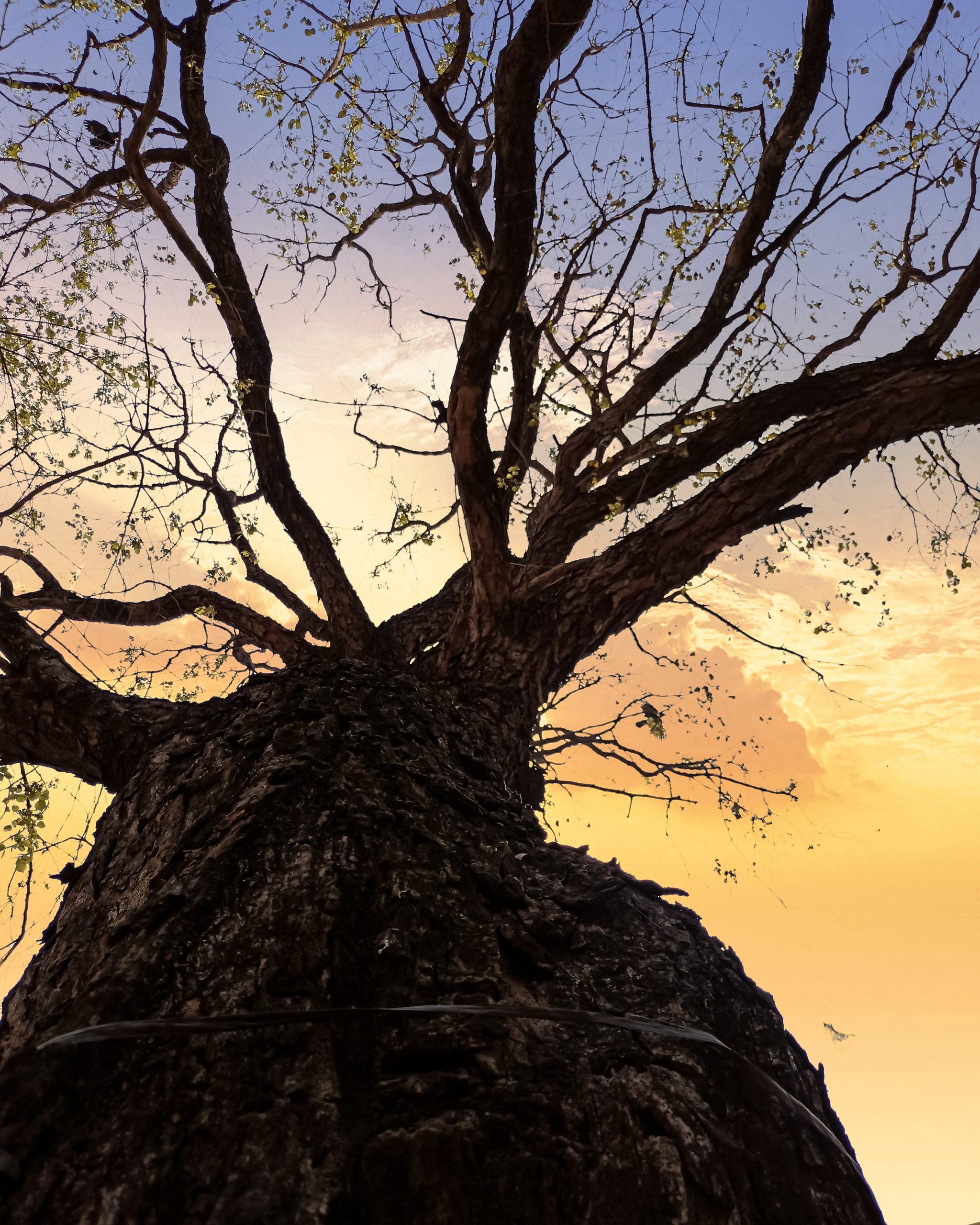 Tree under dynamic sky