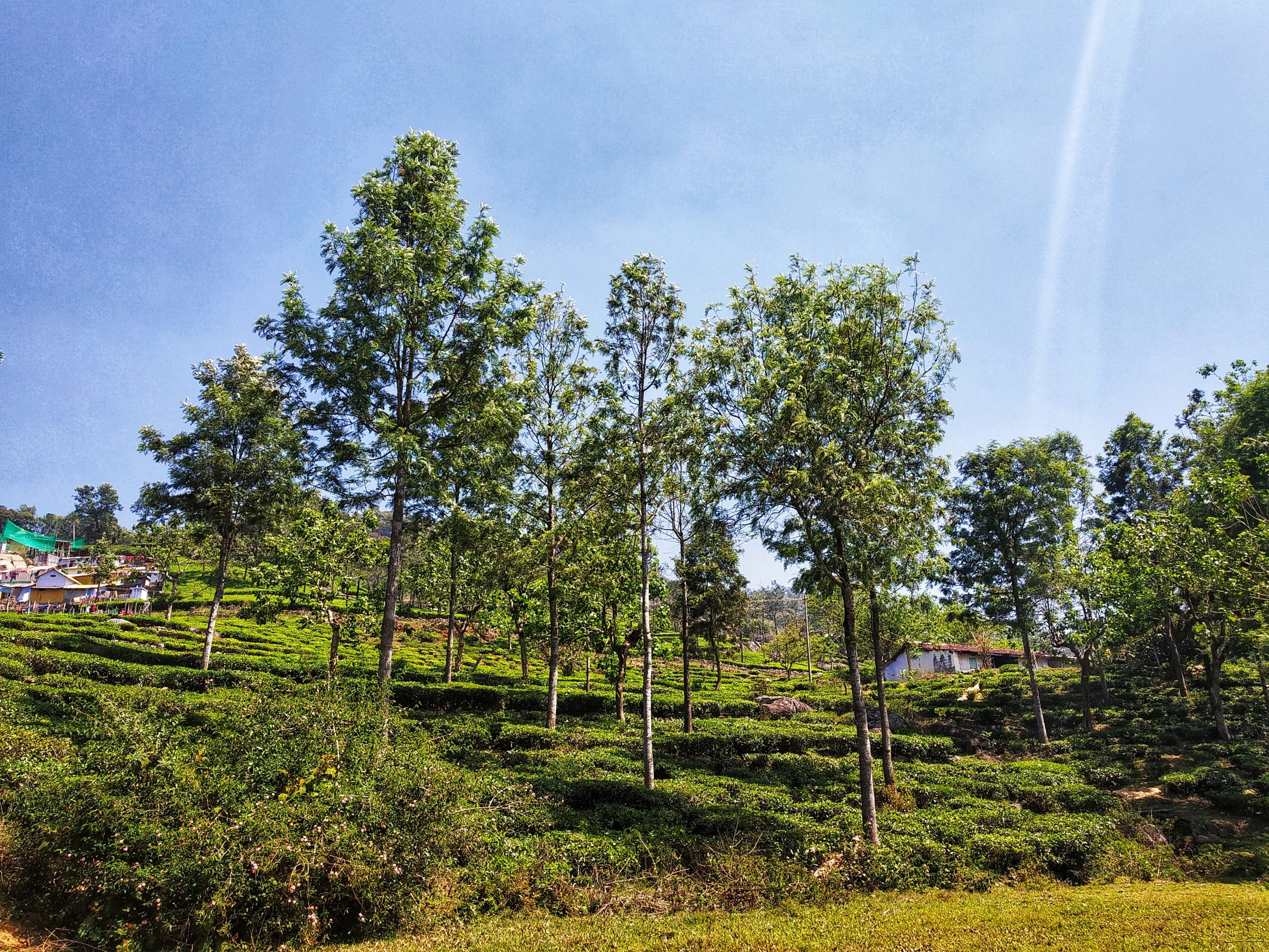 Trees at a hill station