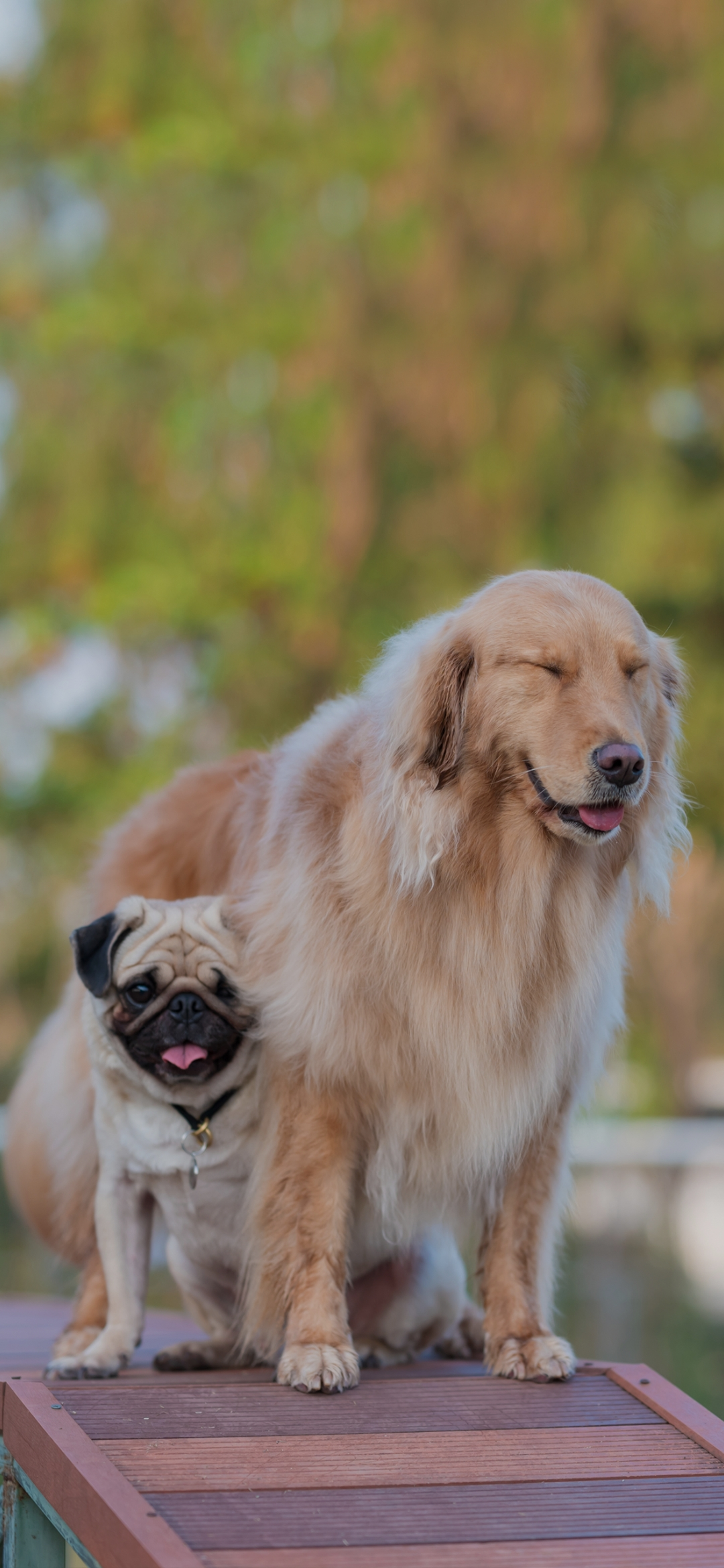 Two pet dogs