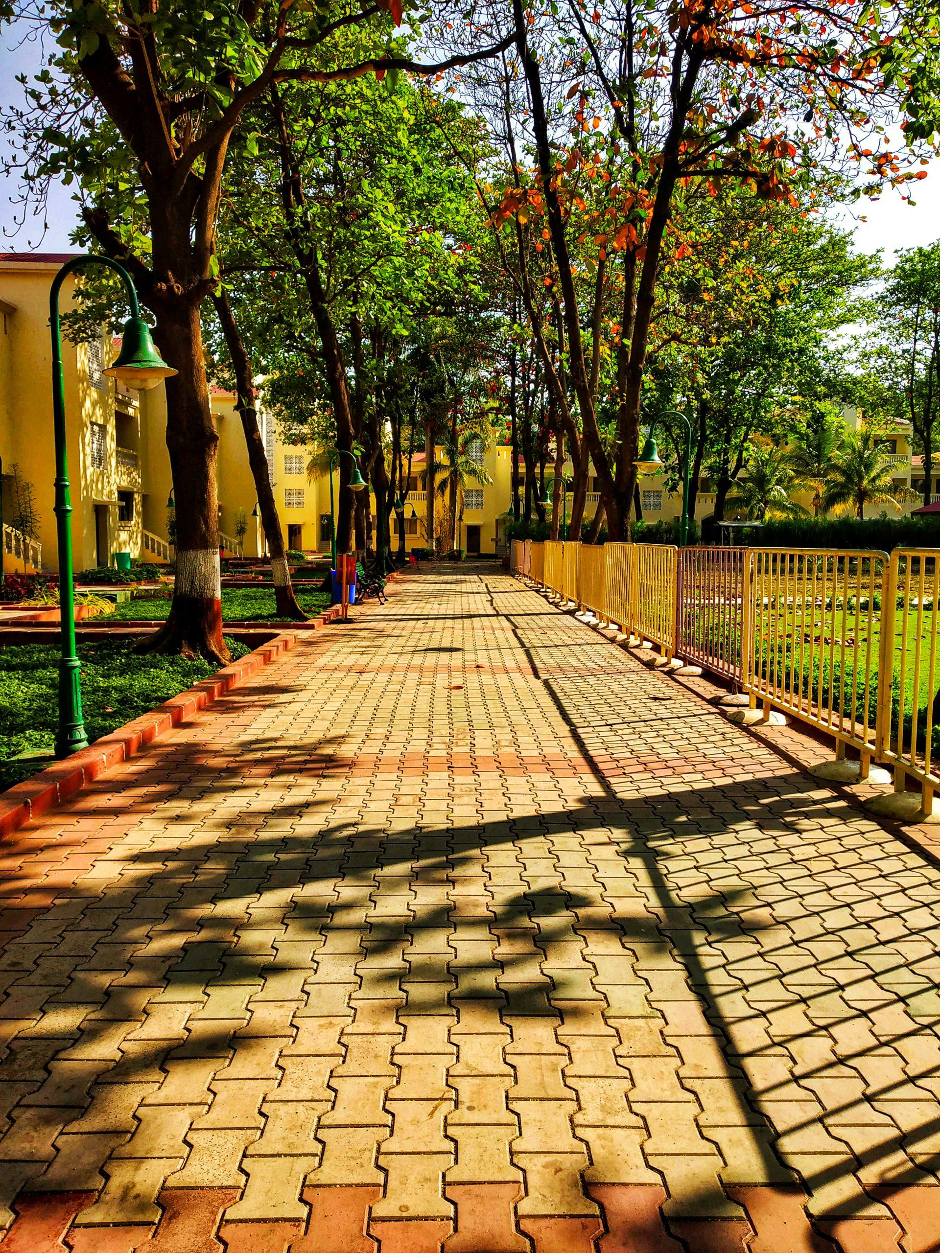 Walkway in the garden
