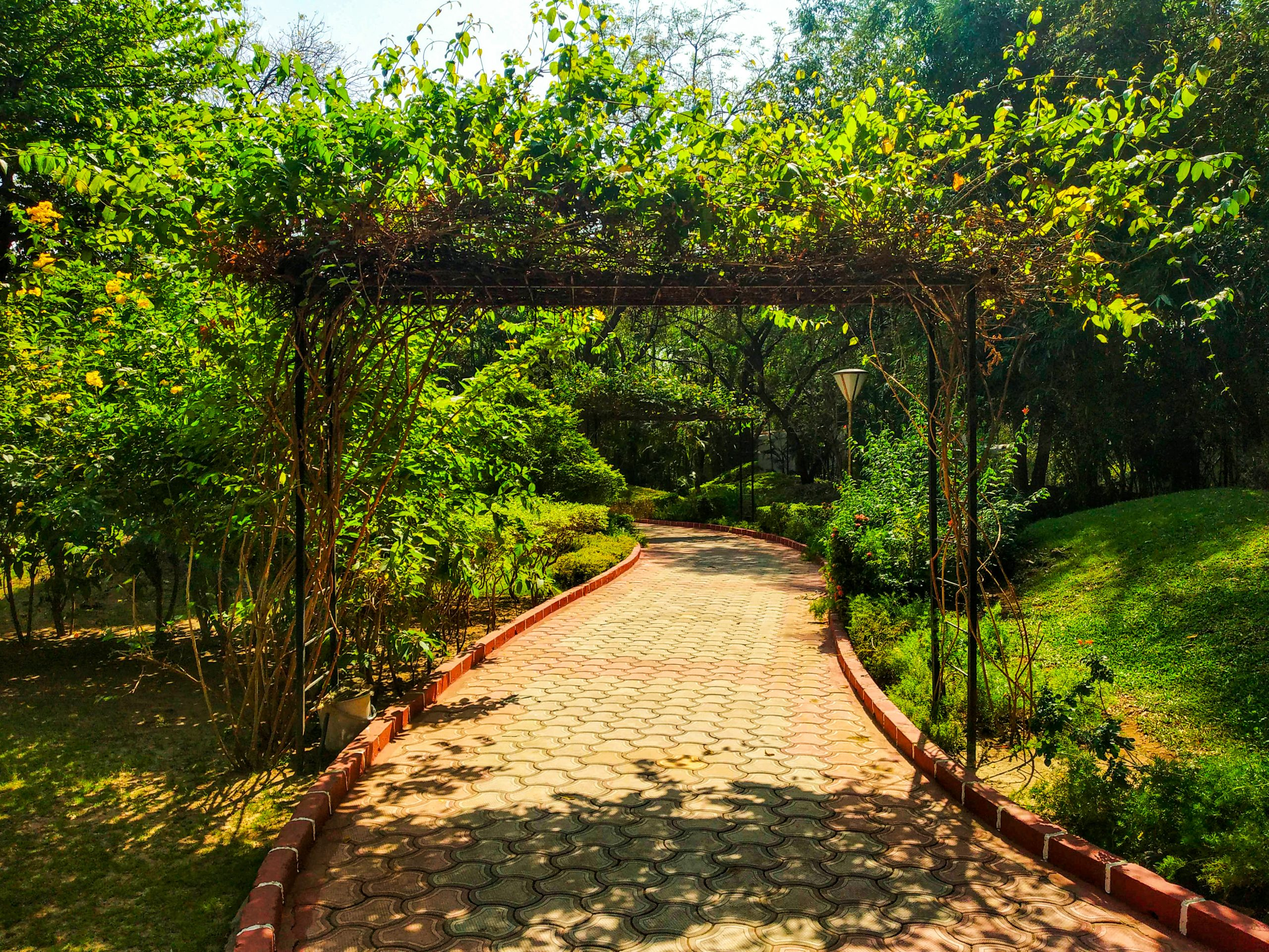 Walkway of the garden
