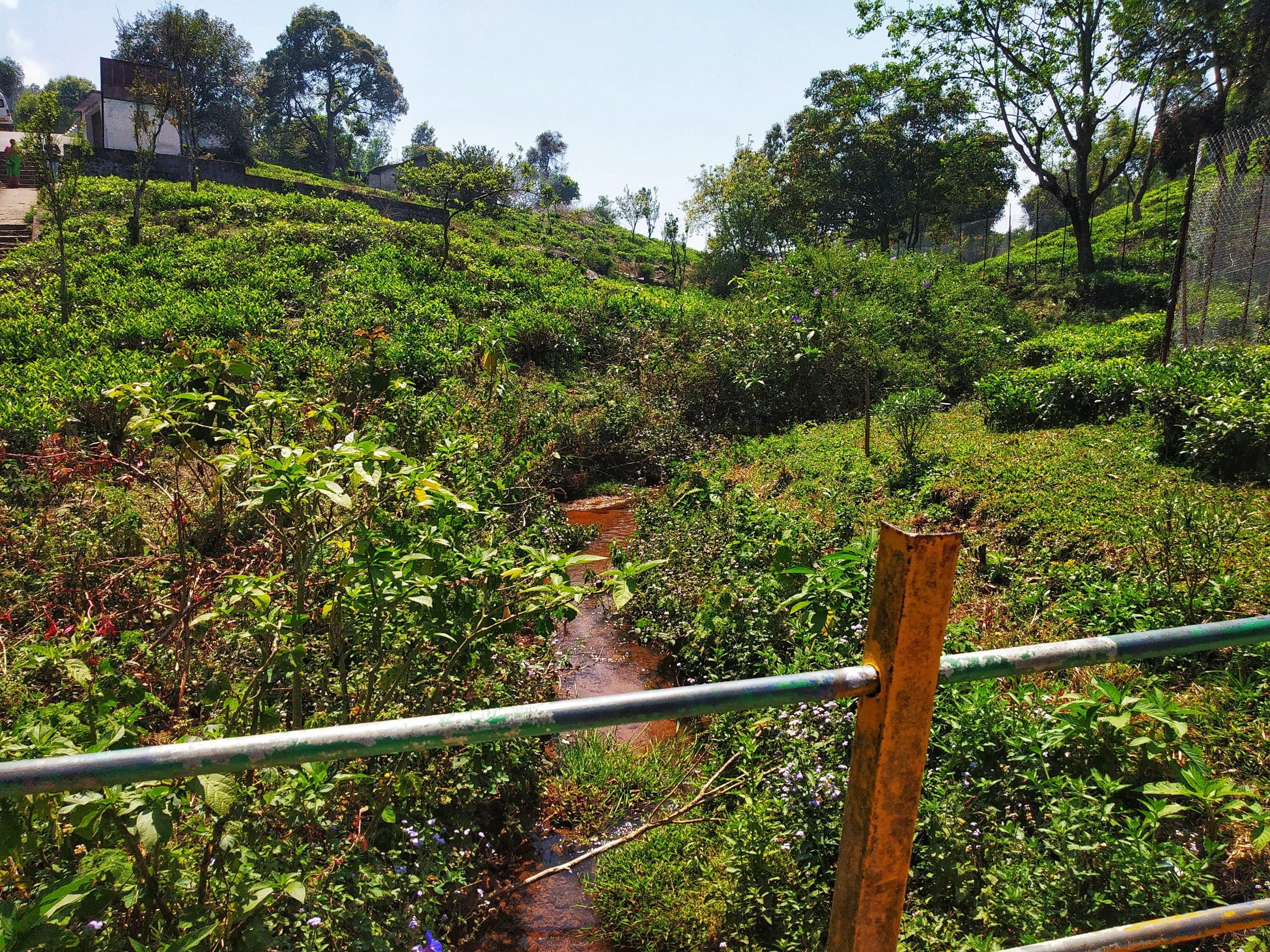 Water flowing through tea estate