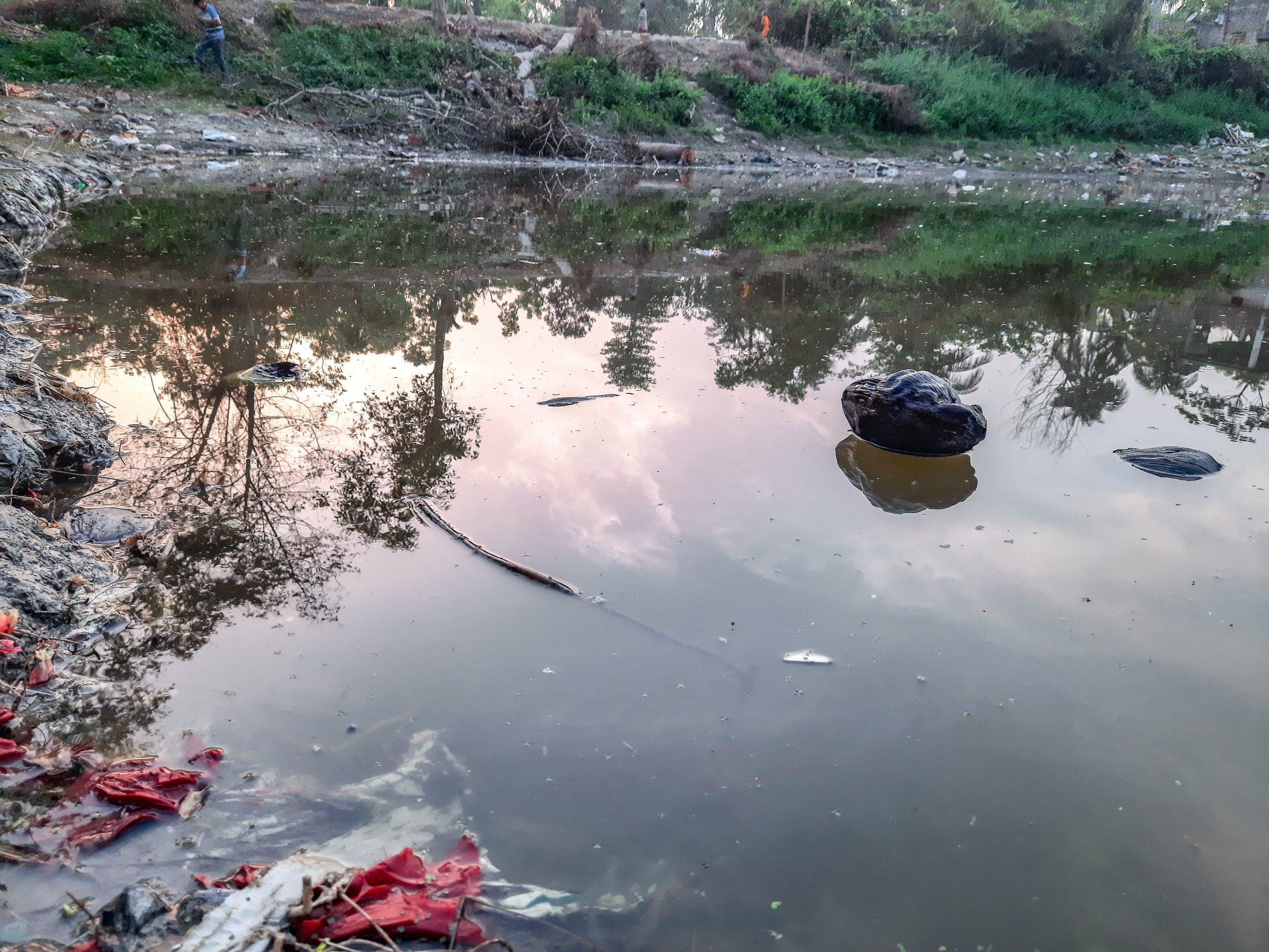 Water pollution in a pond