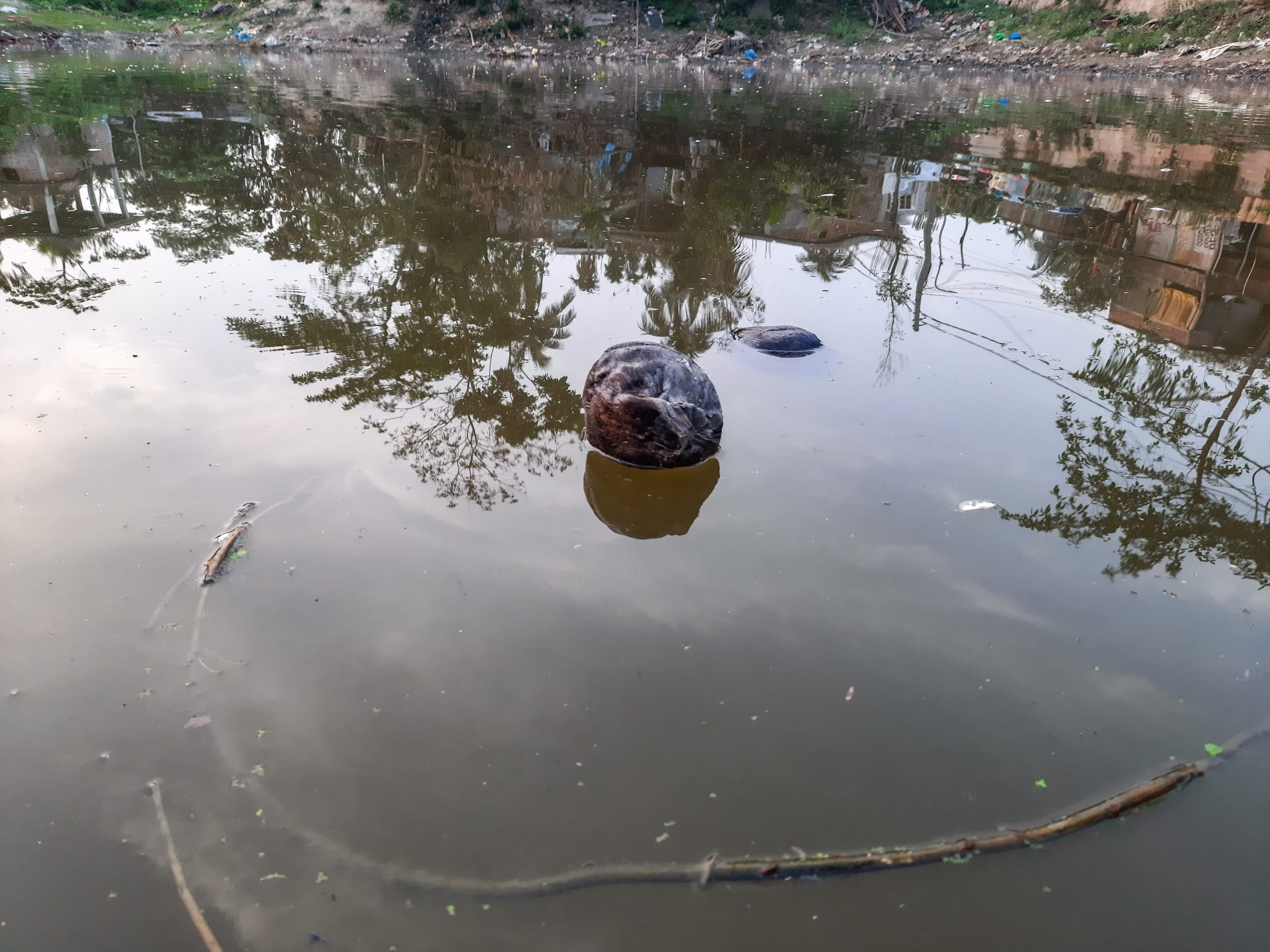 A polluted pond