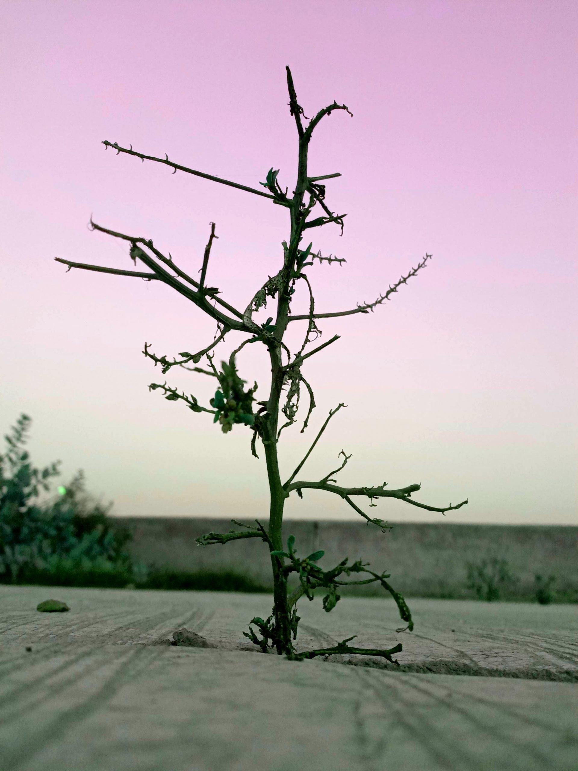 Wild Plant