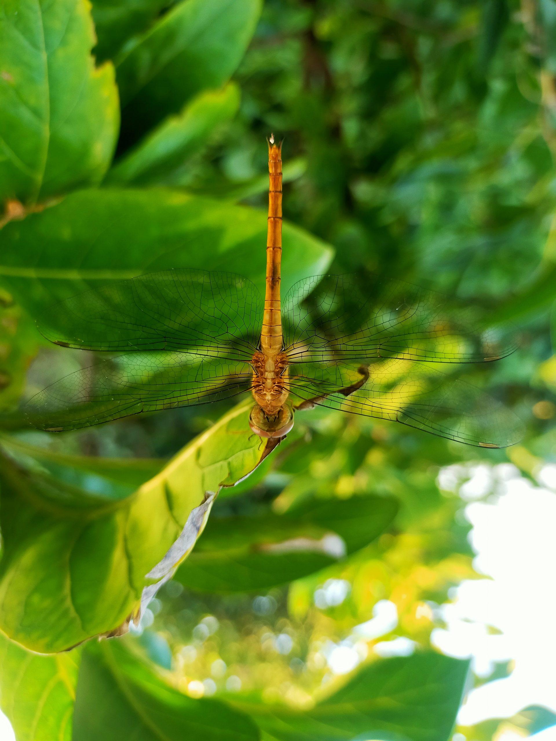 dragon fly on a leaf