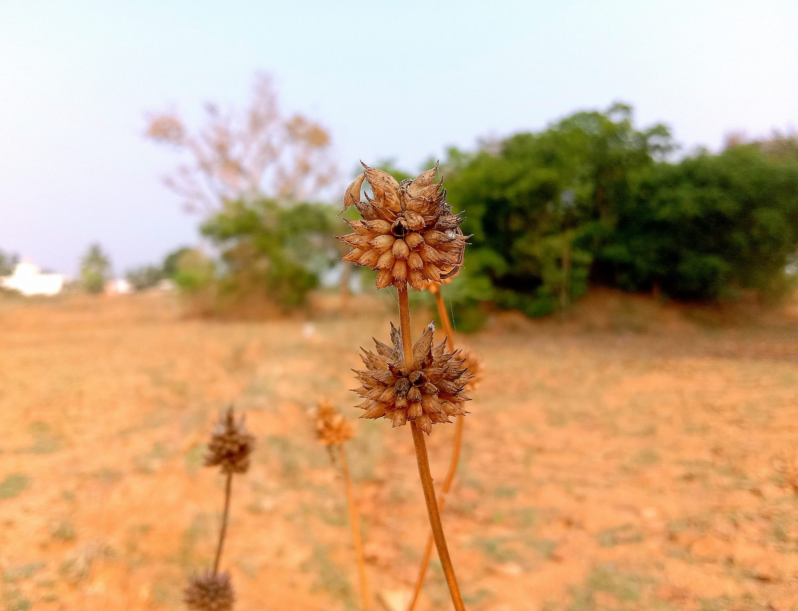 Wild plant in the farm
