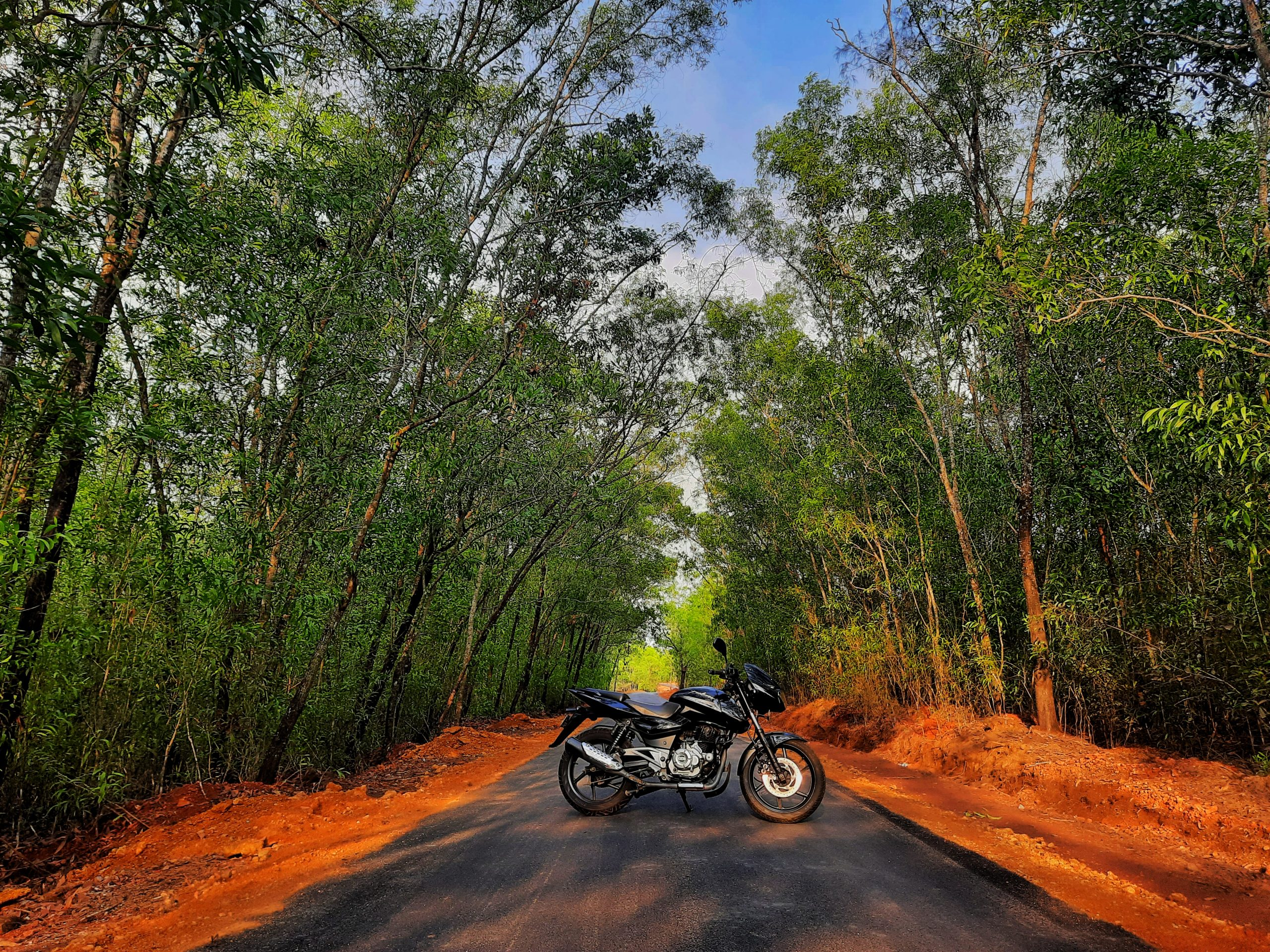 A bike in a jungle parked across a road