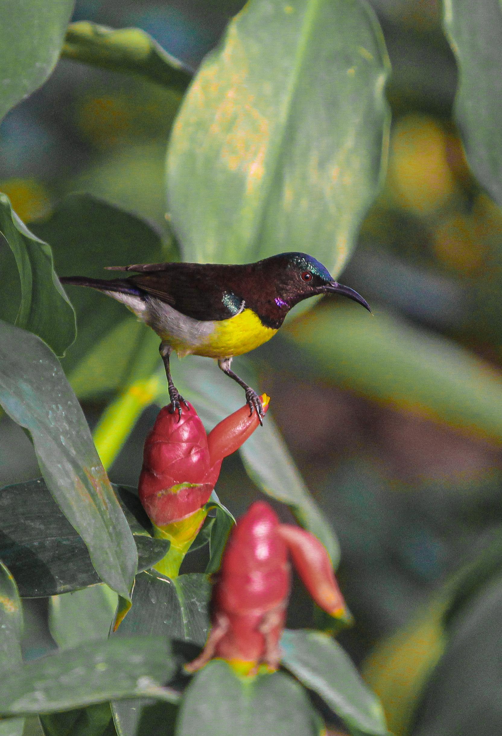 A bird sitting on wildflower